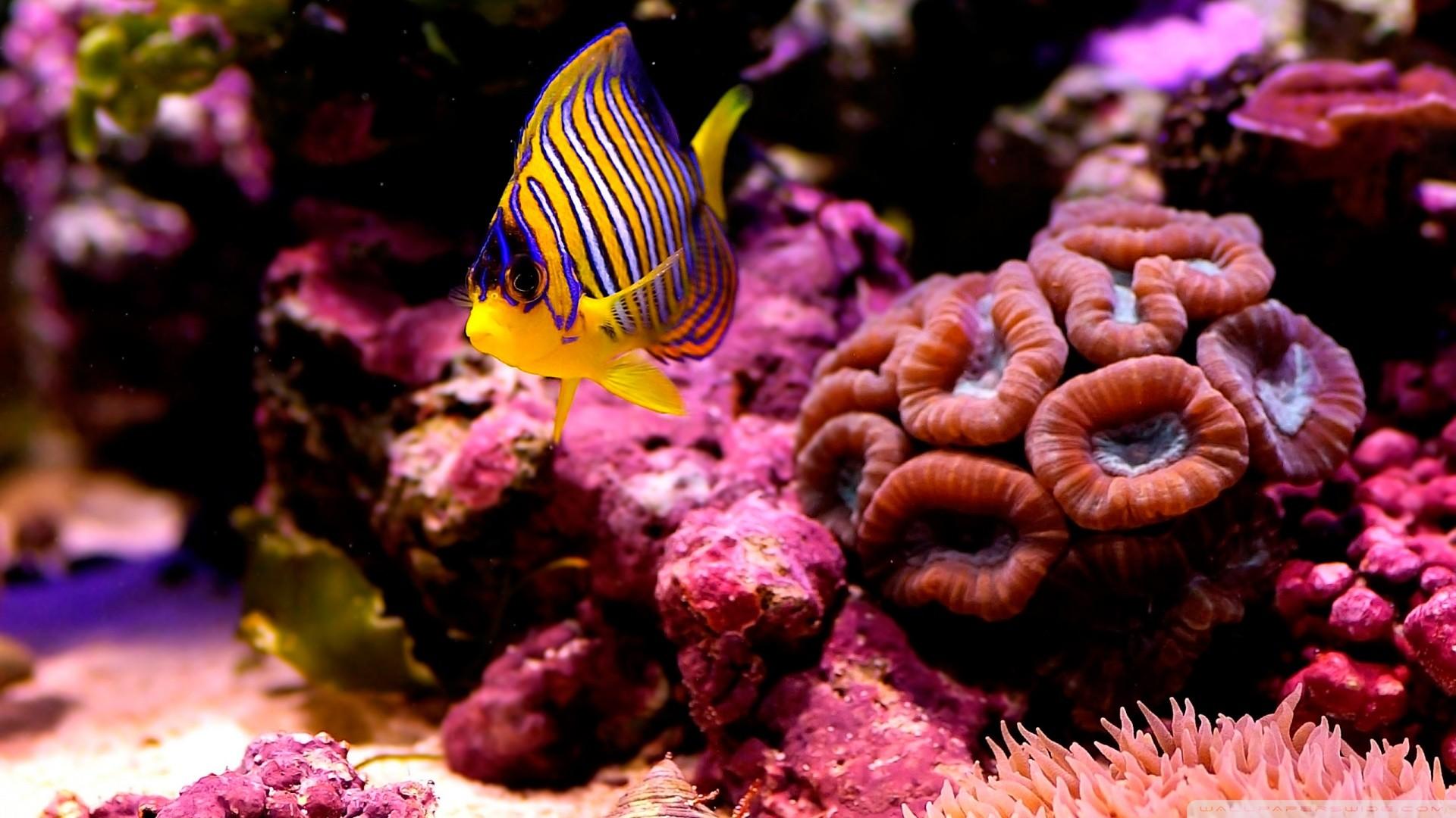 6. coral-reef-wallpaper-HD6-600×338