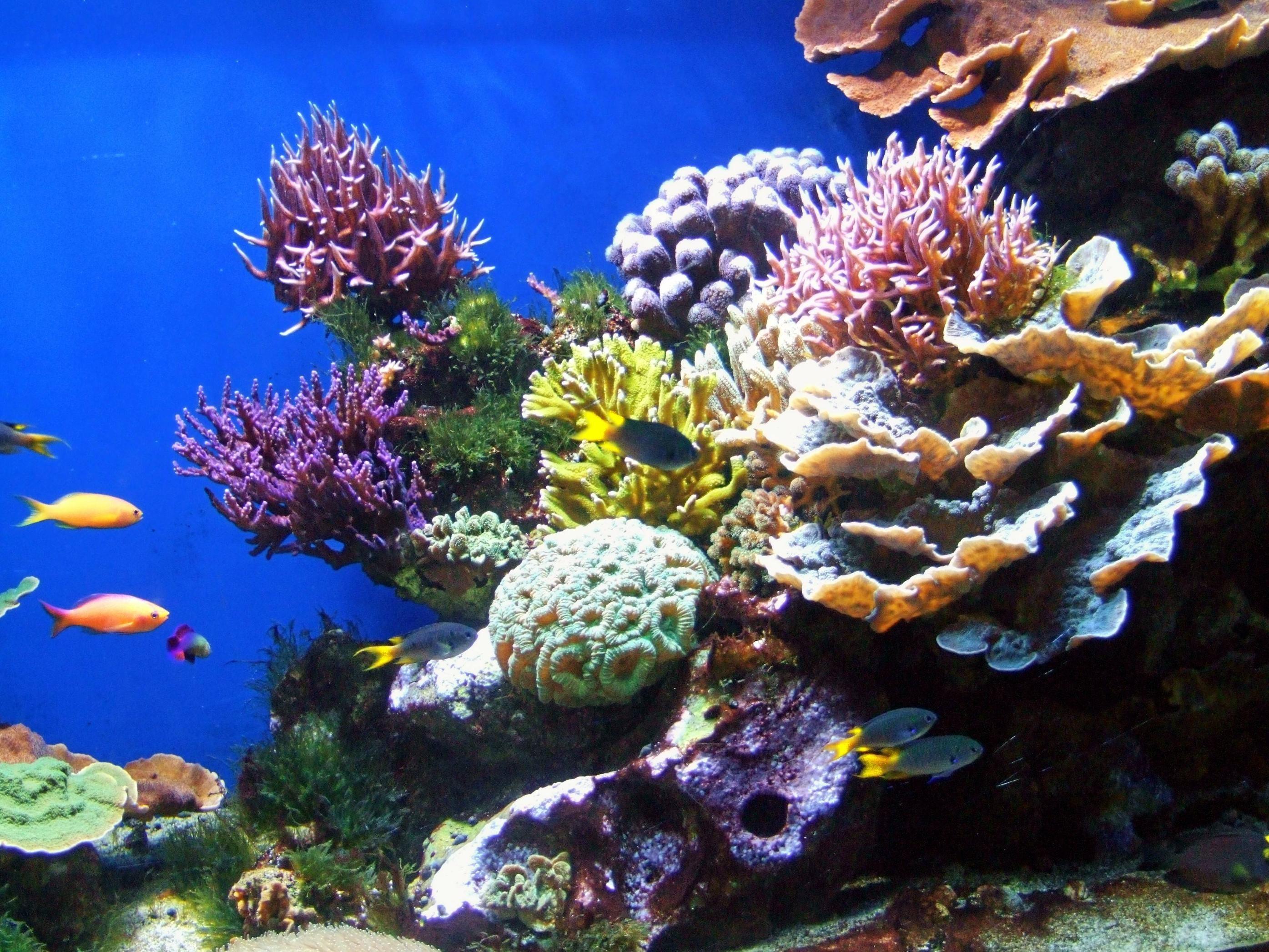 579304-coral-reefs.jpg