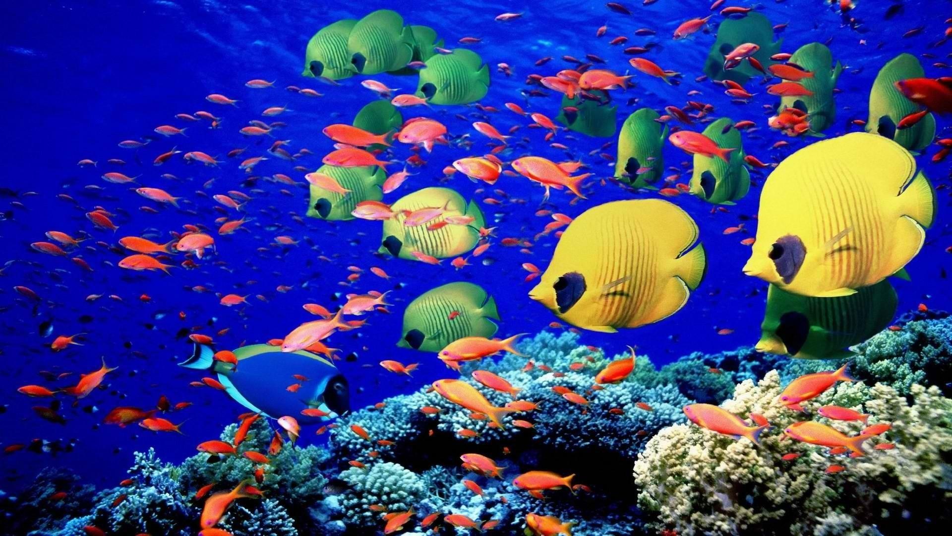 Underwater Coral Reef Wallpaper 1920×1080