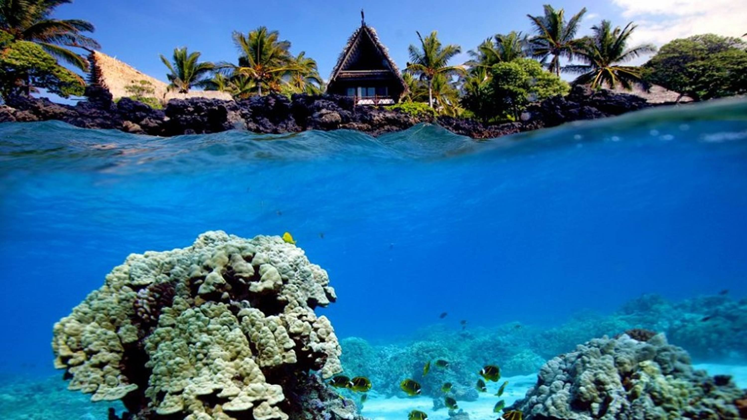 coral reef wallpaper hd · Underwater shot of coral reef and beach hut –  (#129649) – High .