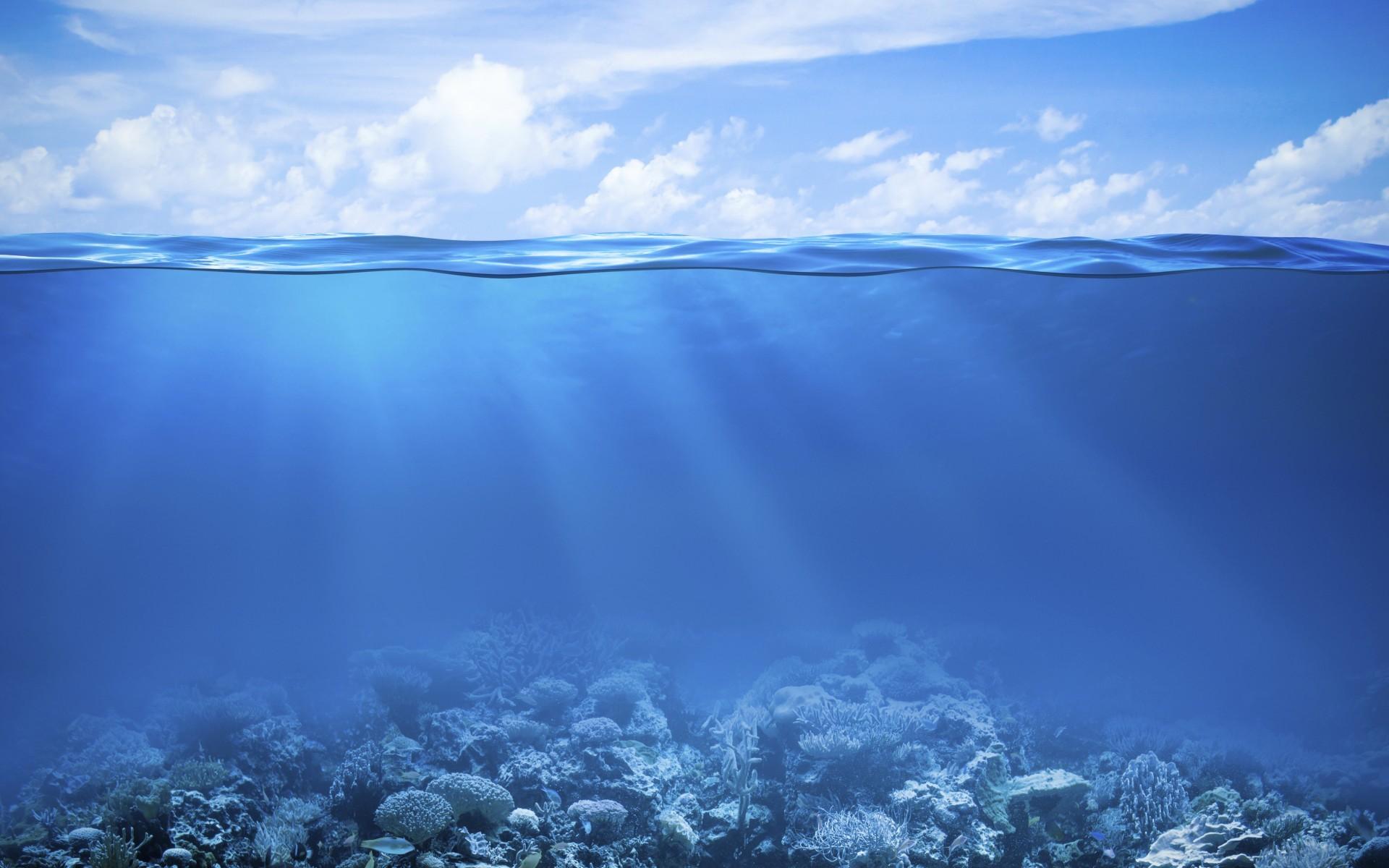Nature / Coral Reef Wallpaper