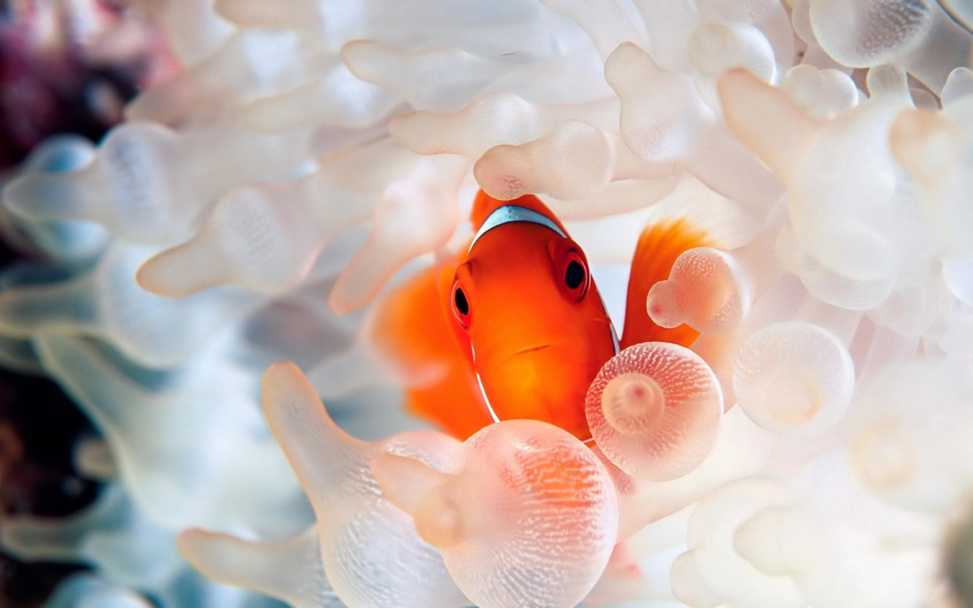 References – CORAL REEFS · Fish on Pinterest
