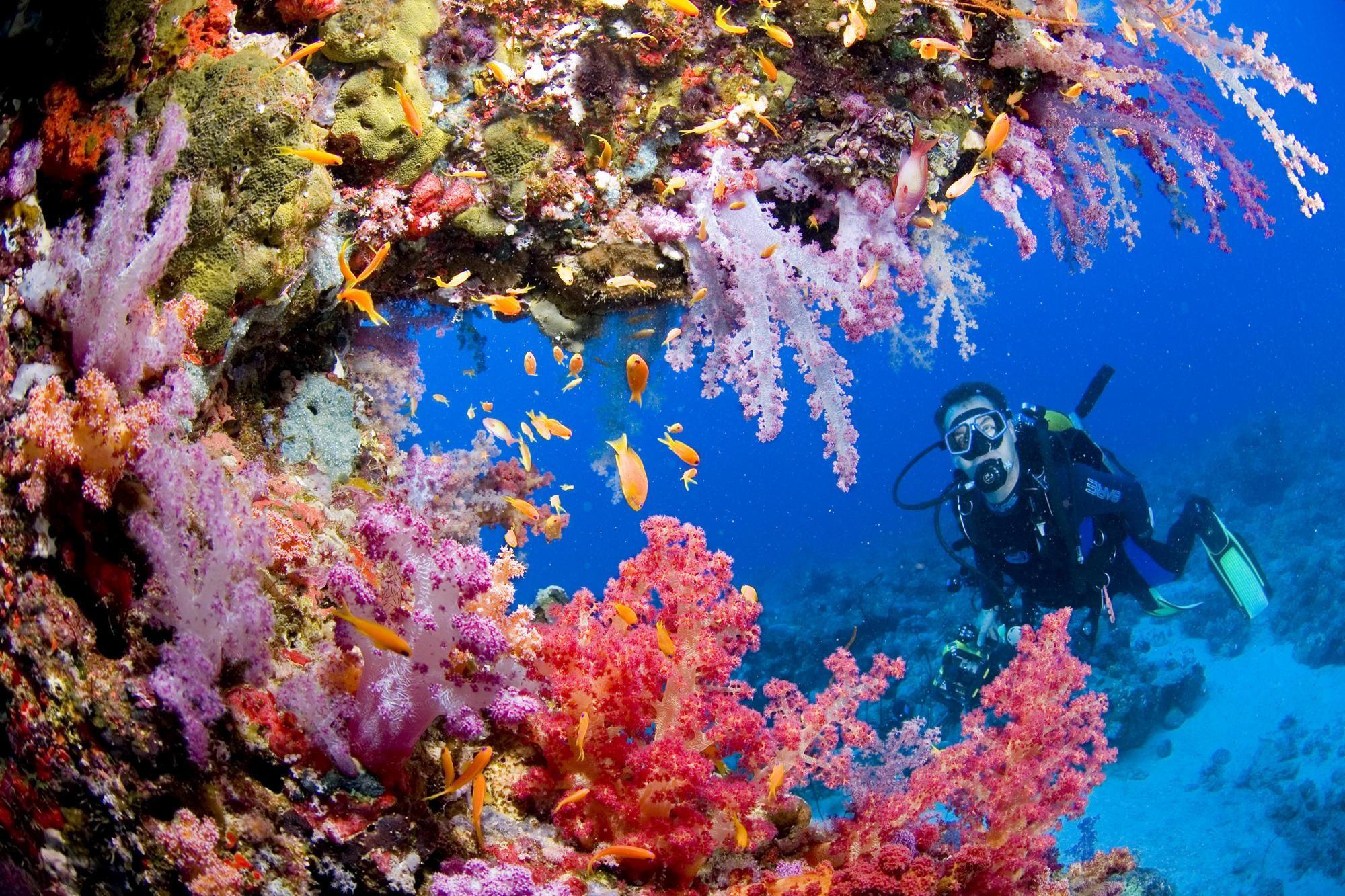 Sports Scuba Diving Ocean Sea Underwater Coral Reef People Background Free
