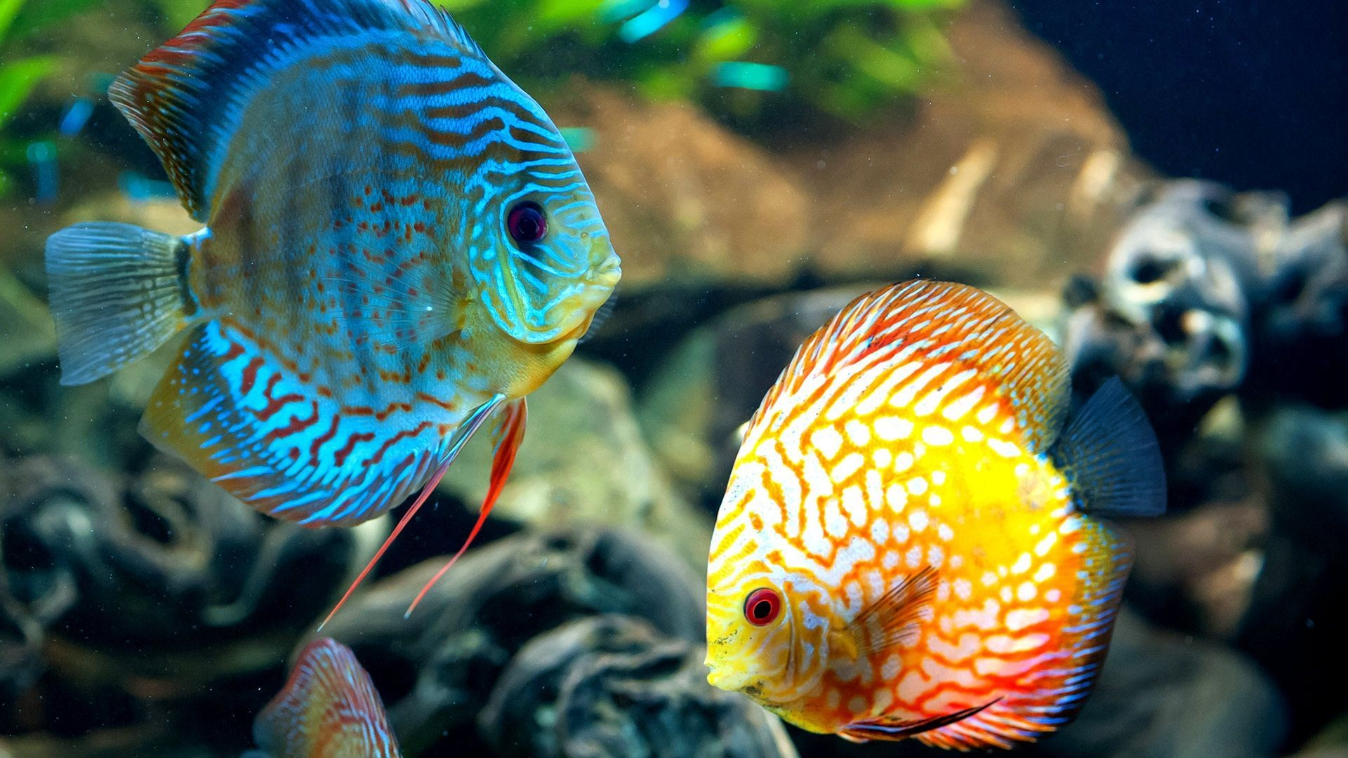 Coral Reef Fish wallpapers – Free full hd wallpapers for 1080p .