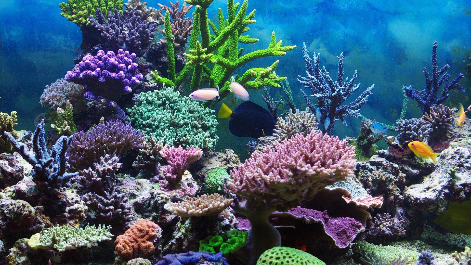 Coral Reefs – Underwater Coral Reef Ocean Tropical Wallpapers Desktop for HD  16:9 High