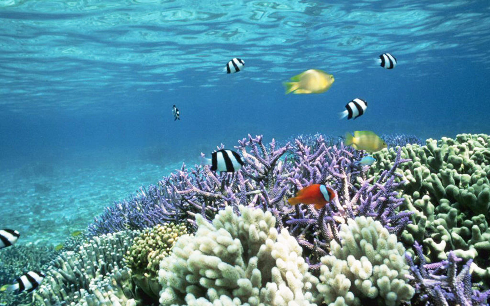 Cool Coral Reef Wallpaper