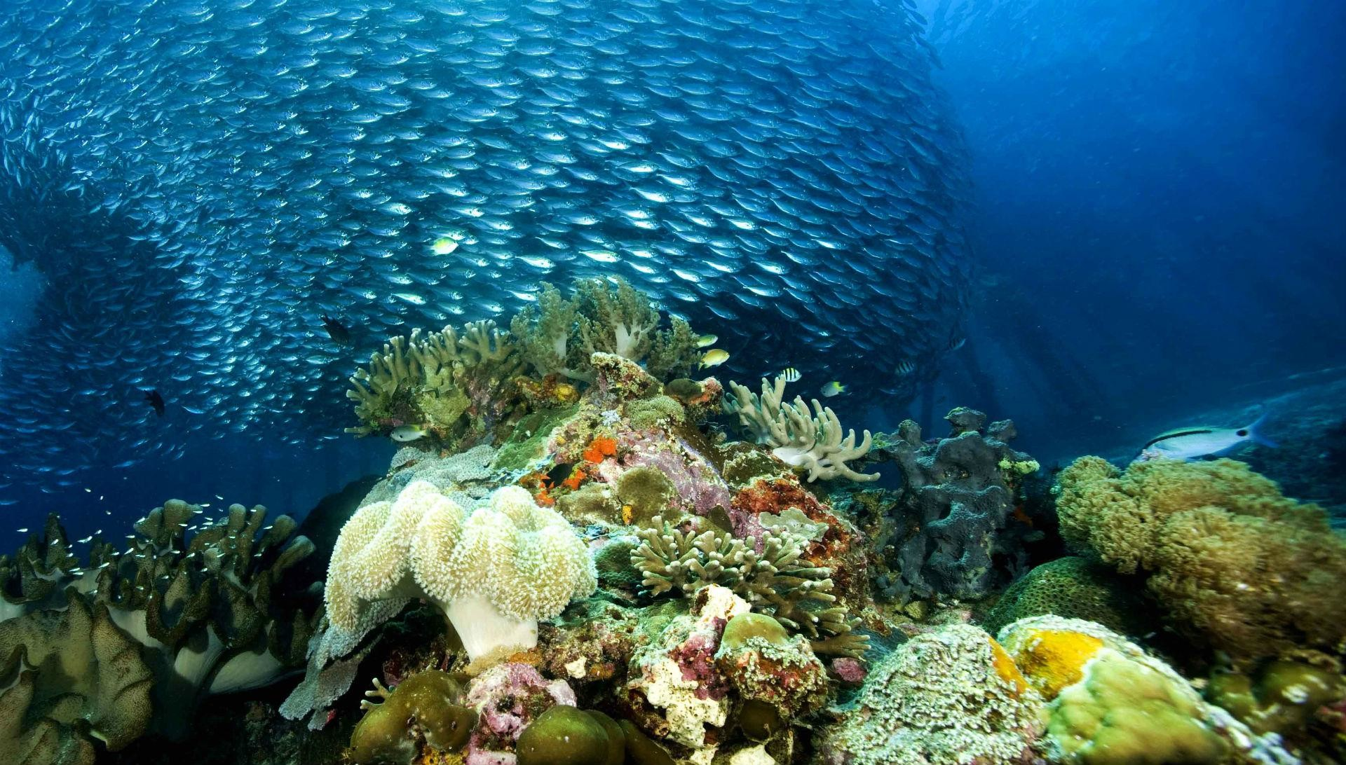Underwater Ocean Sea Nature Coral Reef Tropical School Image .