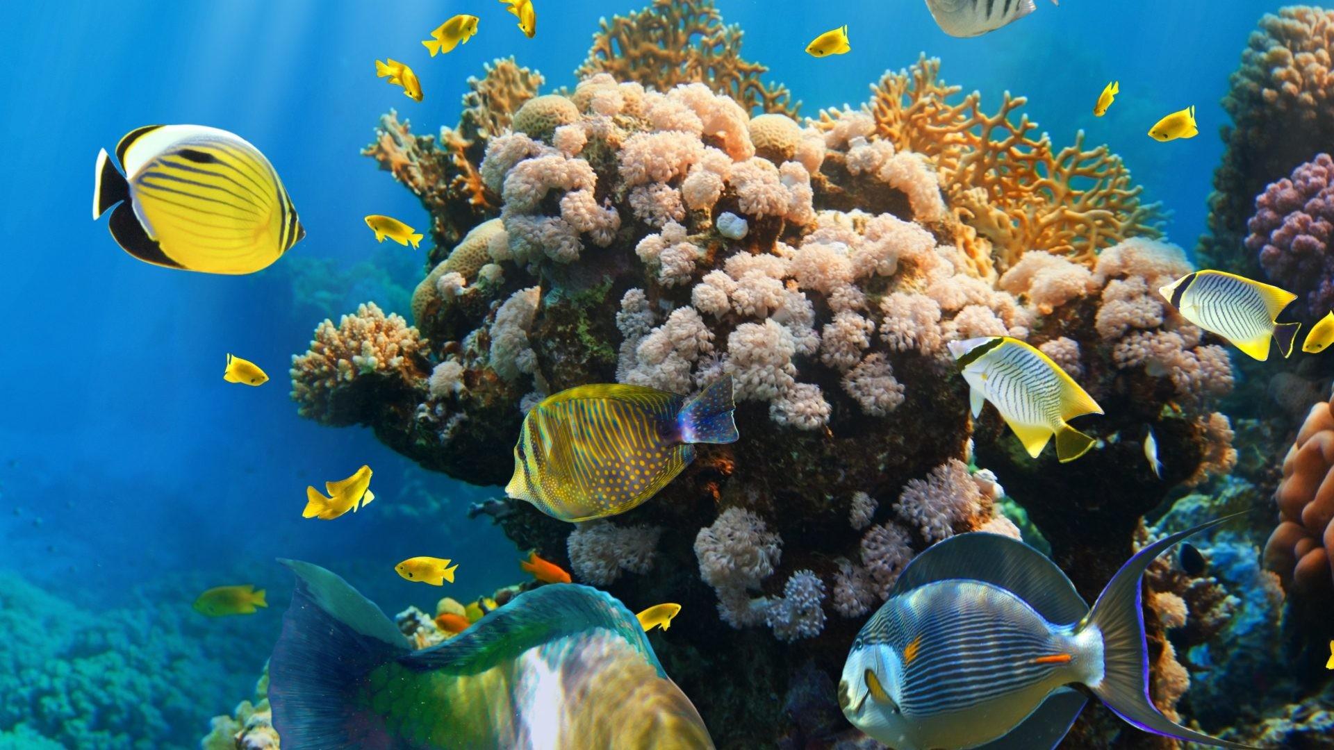 Tropical Fishes Reef Underwater Ocean Coral Reefs Wallpaper Hd Detail