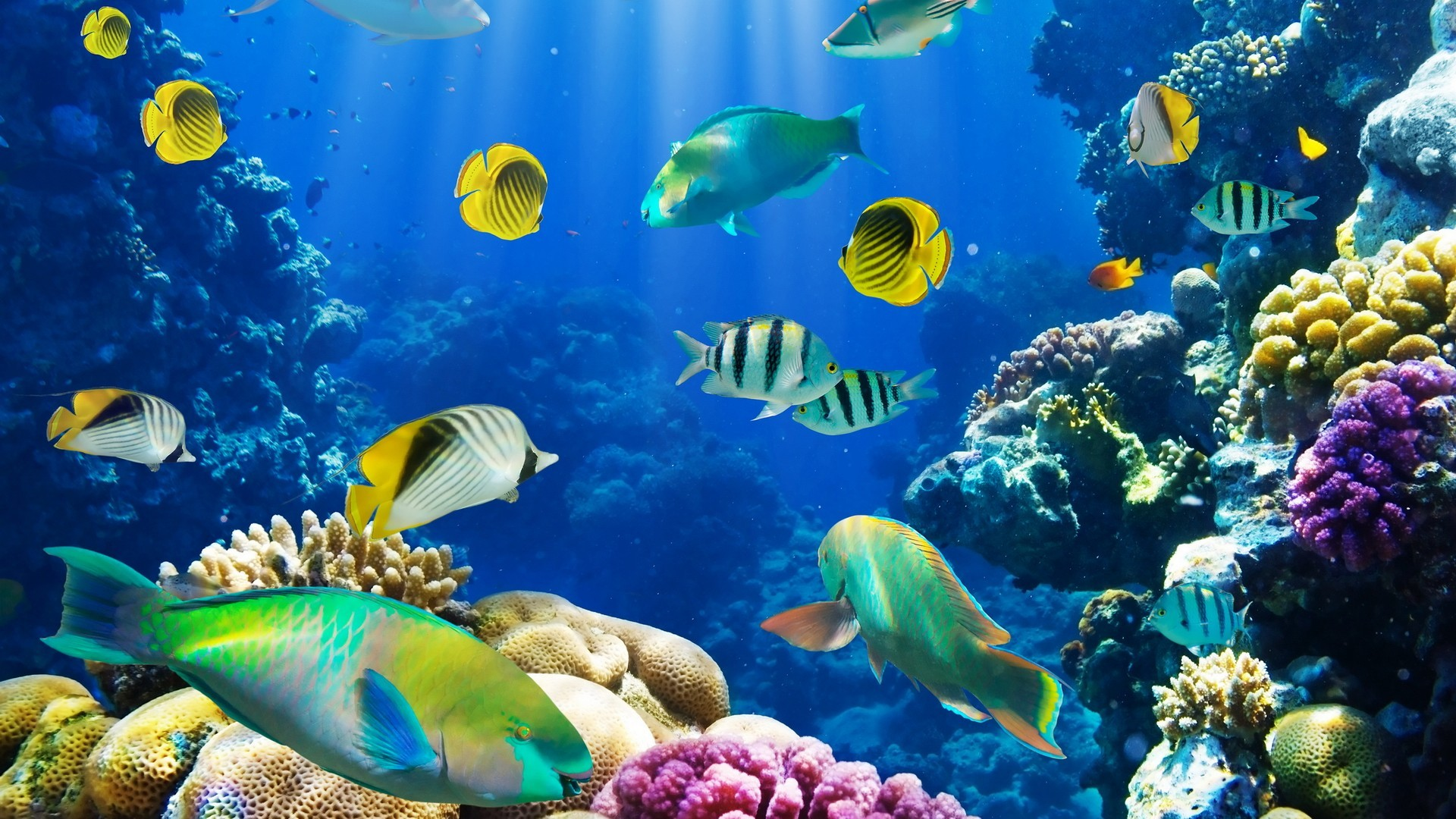 nature fish coral reef exotic · Coral WallpaperFish WallpaperBackground Hd  …