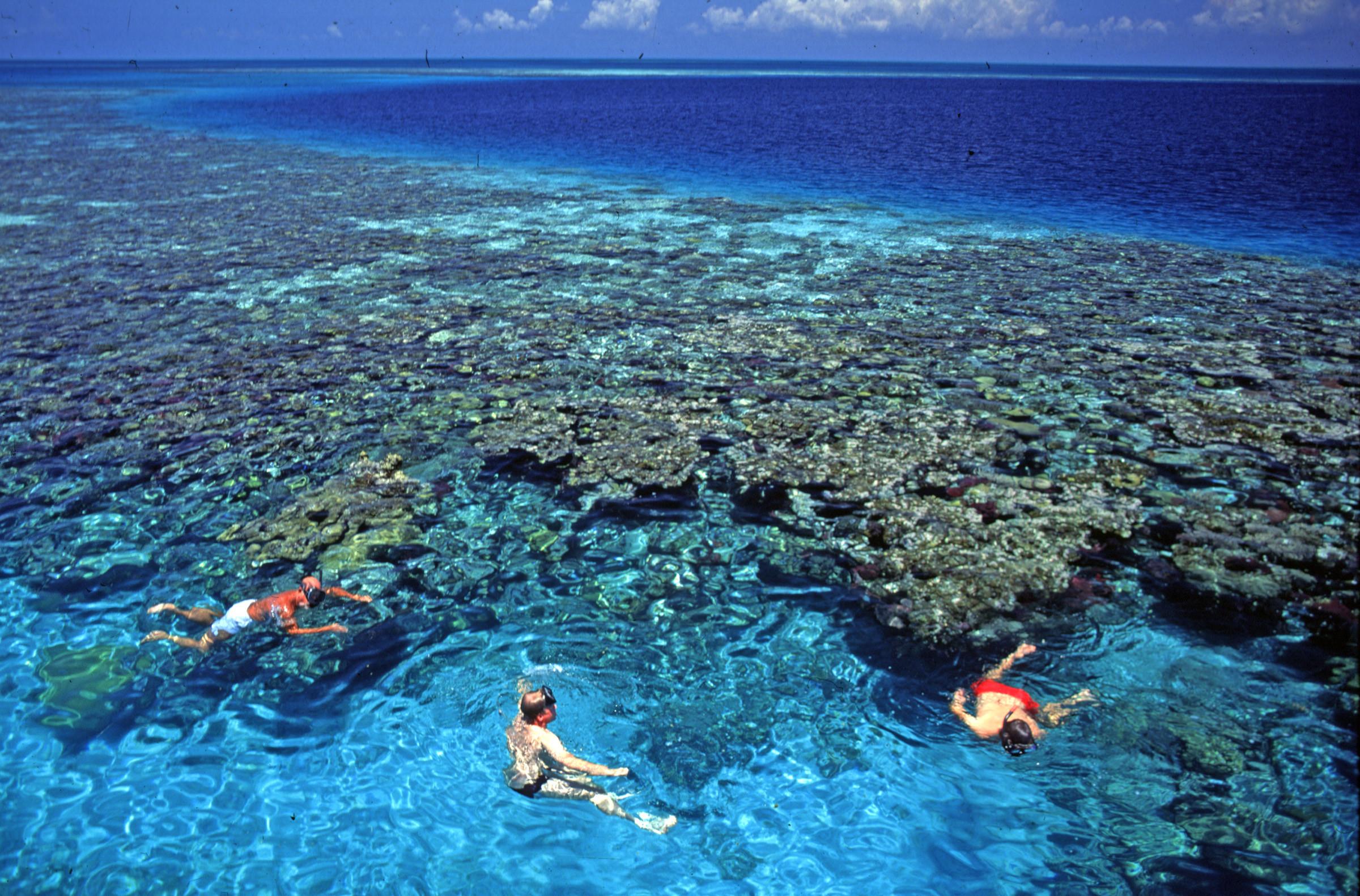 Belize Barrier Reef Top Wallpaper
