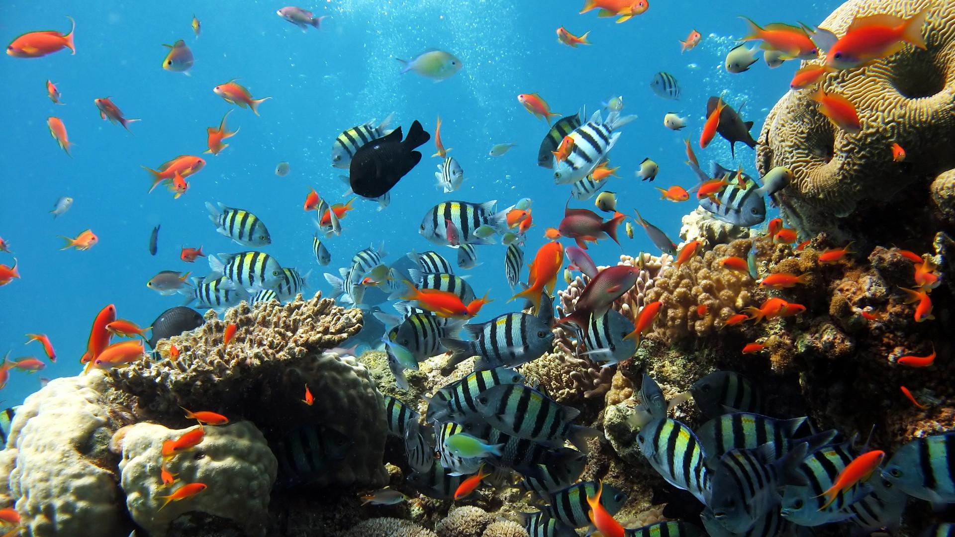 Coral reefs · HD Underwater Widescreen Desktop Wallpapers | underwater full hd  wallpapers underwater pictures underwater .