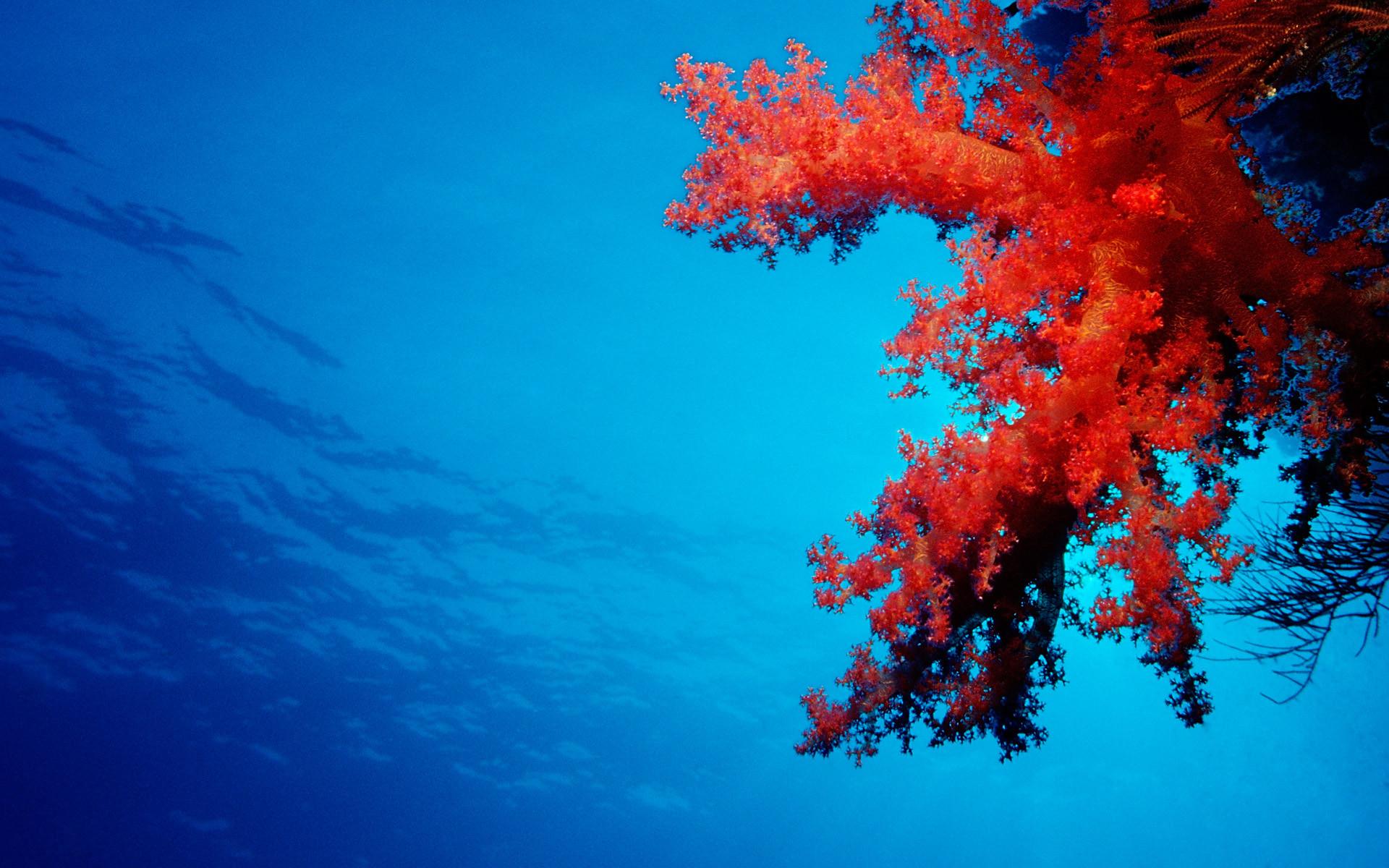 Coral reef 4K Ultra HD Wallpaper | 8k ultra hd 4k ultra hd hd 1080 hd