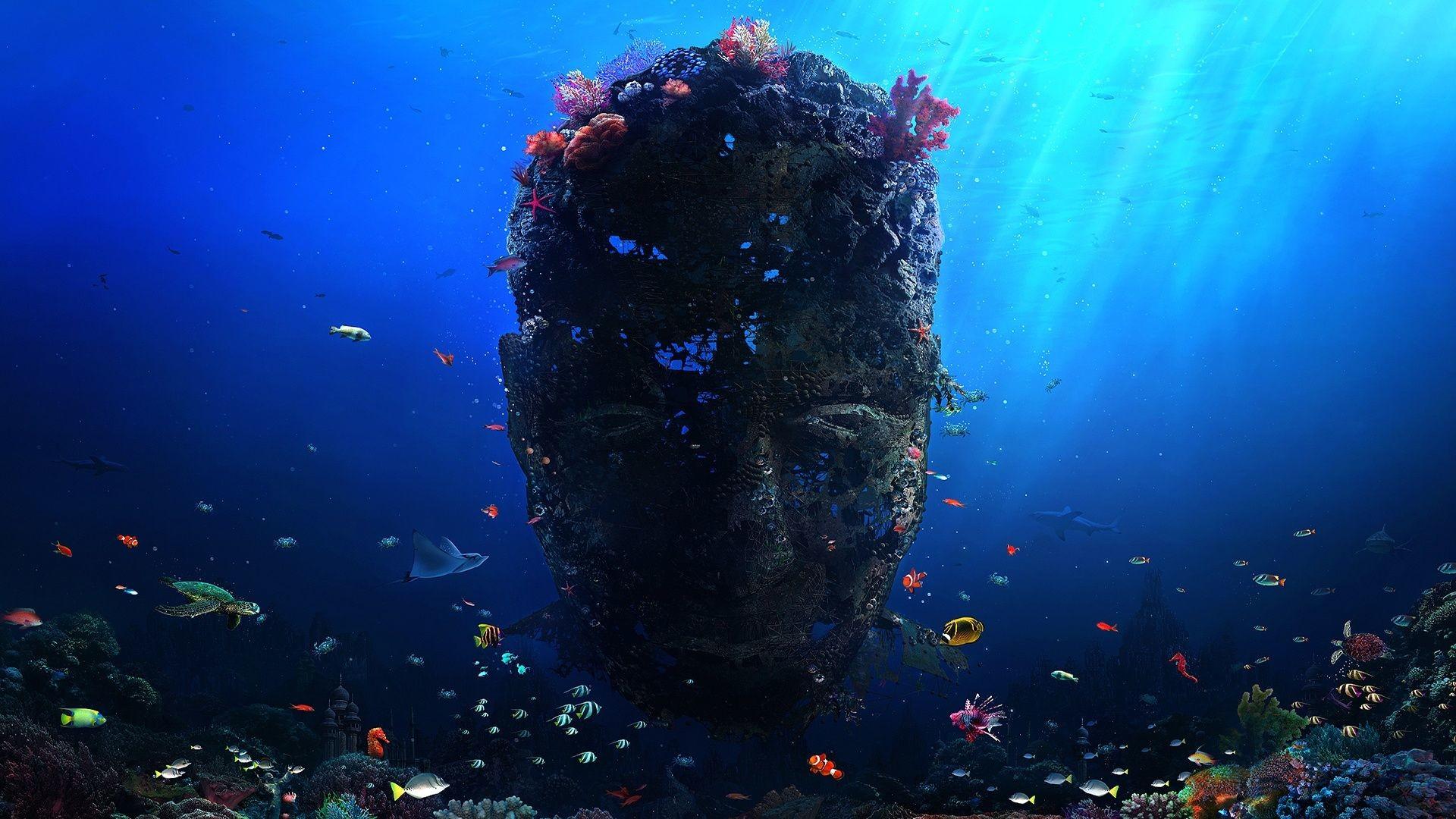 Coral Reef Wallpaper – HD Wallpapers · wapelper.com