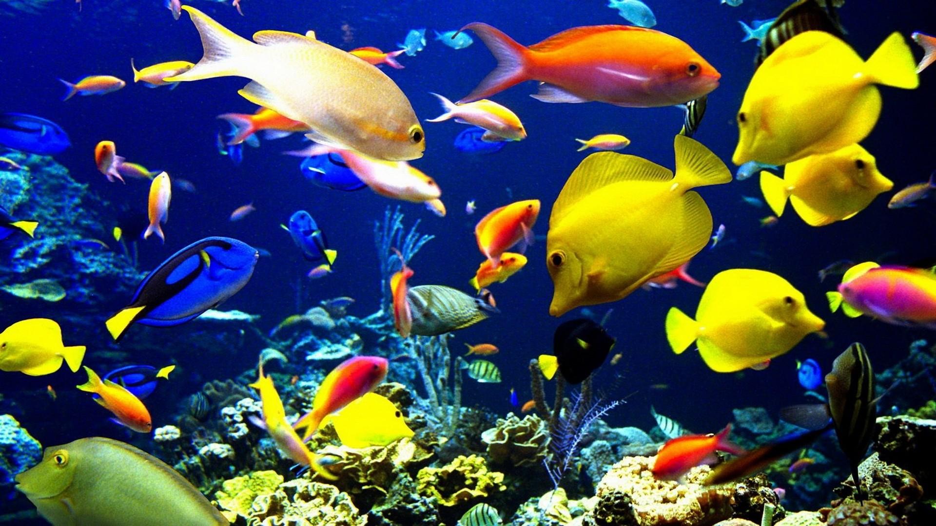 sea ocean coral reef wallpaper | | 27888 | WallpaperUP .
