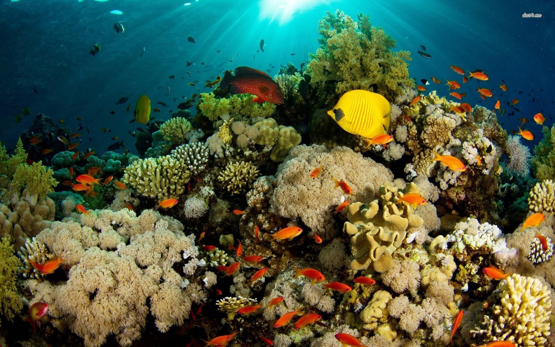 Tropical Fish Around The Coral Reef