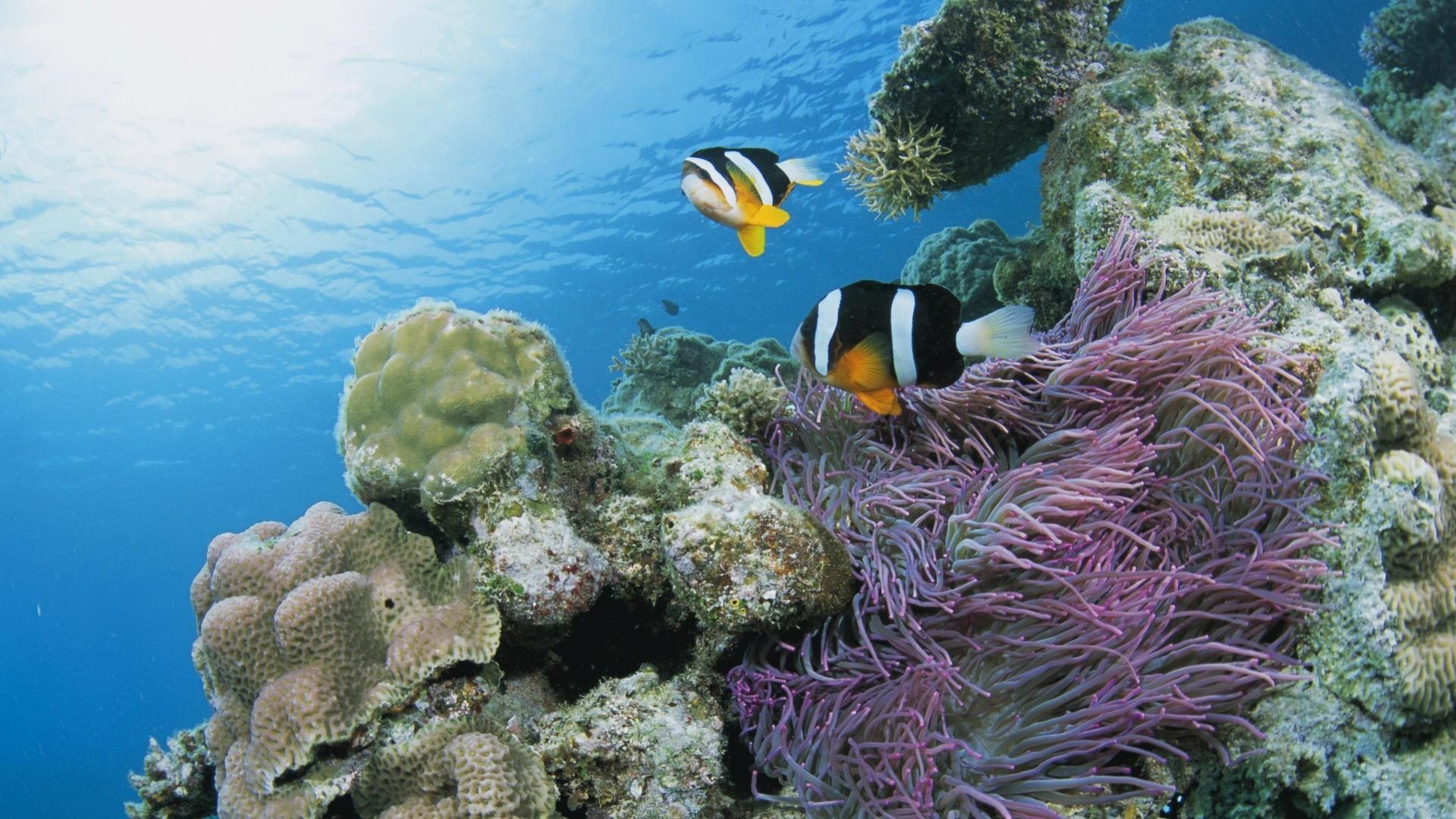 Coral Reefs – Coral World Water Sea Beautiful Underwater Ocean Reef  Wallpaper Hd for HD 16