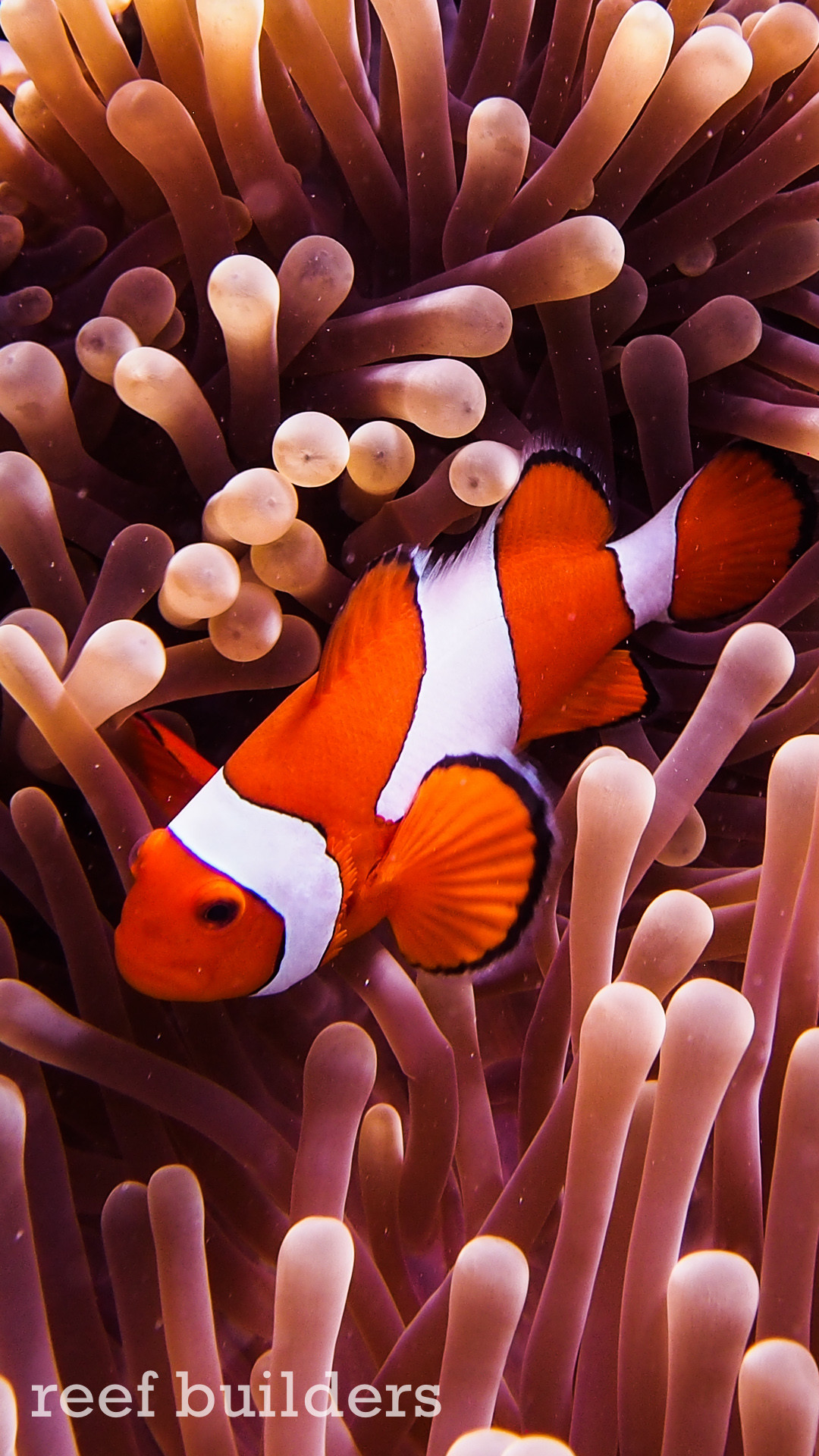 … iphone6-plus-coral-reef-fish-wallpaper-background-6 …
