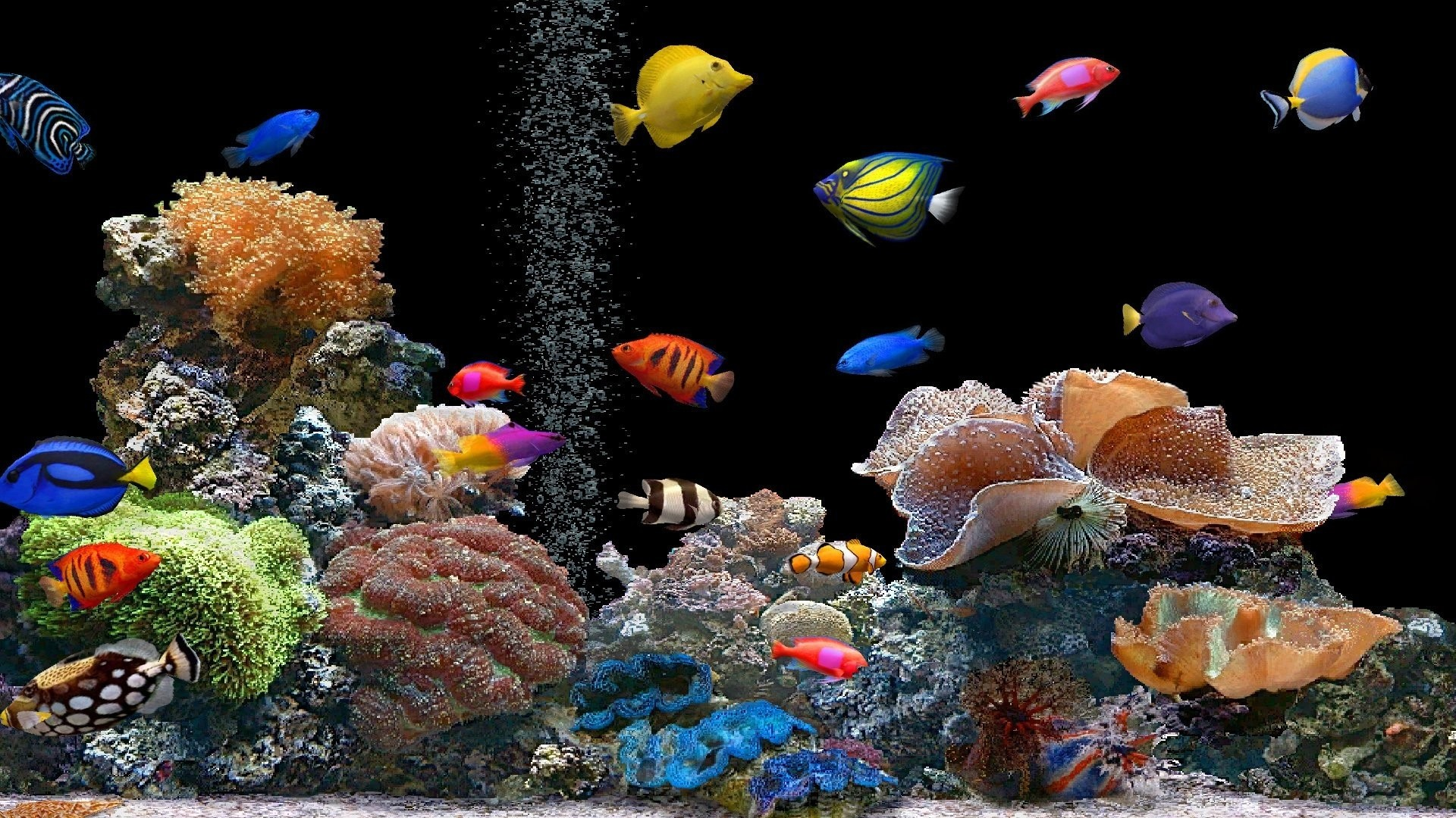 Preview wallpaper fish, underwater, colorful, coral 1920×1080