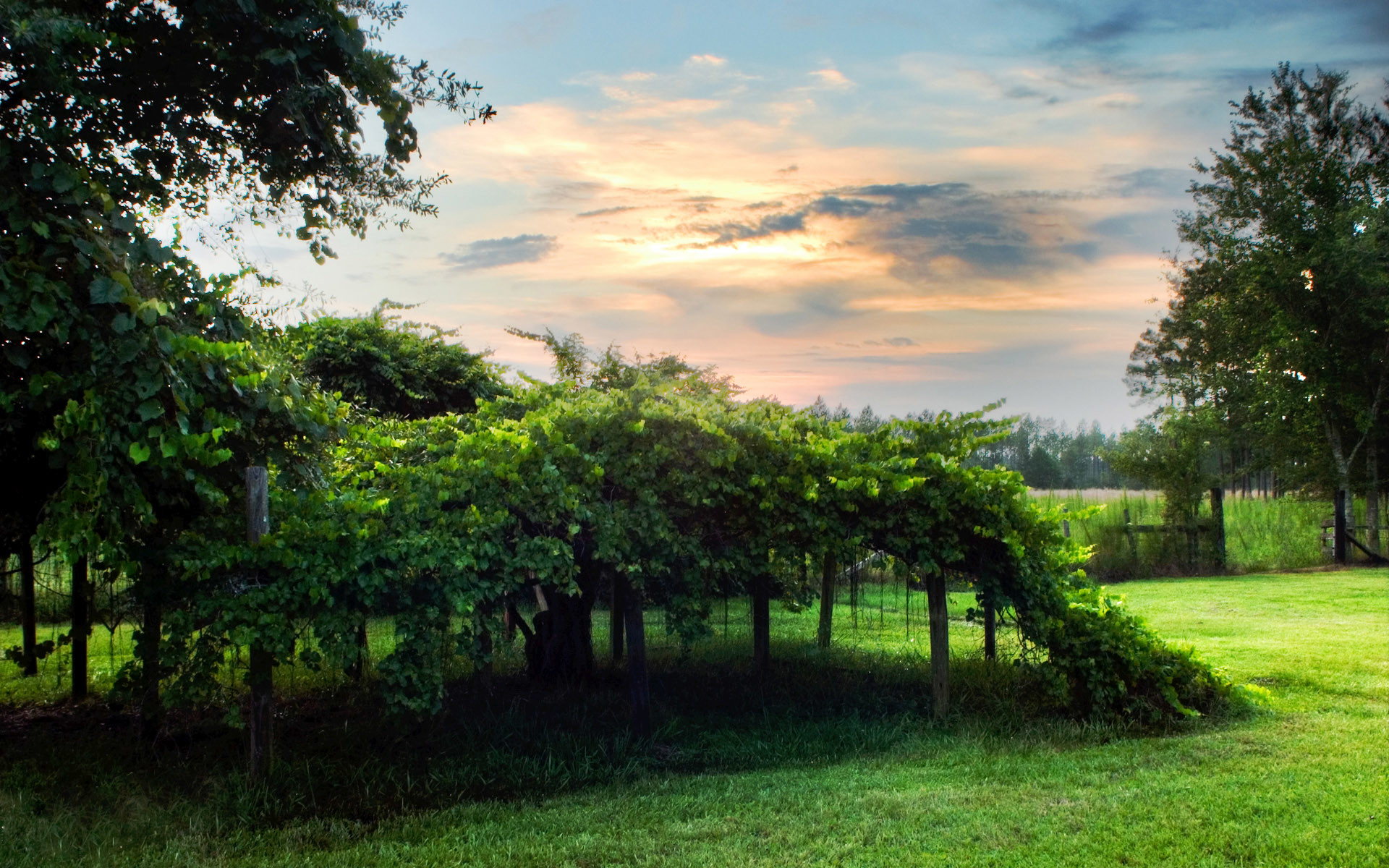 download beautiful hd natural greenery scene wallpaper