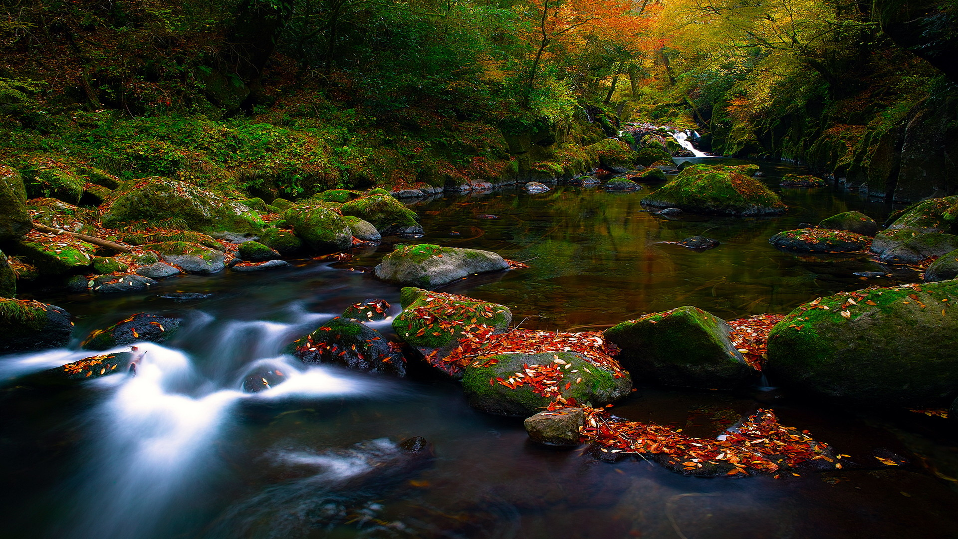Free Nature Screensavers And Wallpapers For Computer: Autumn by .