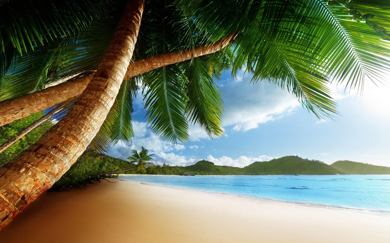 Palm Clean Beach Caribbean HD Free Wallpaper