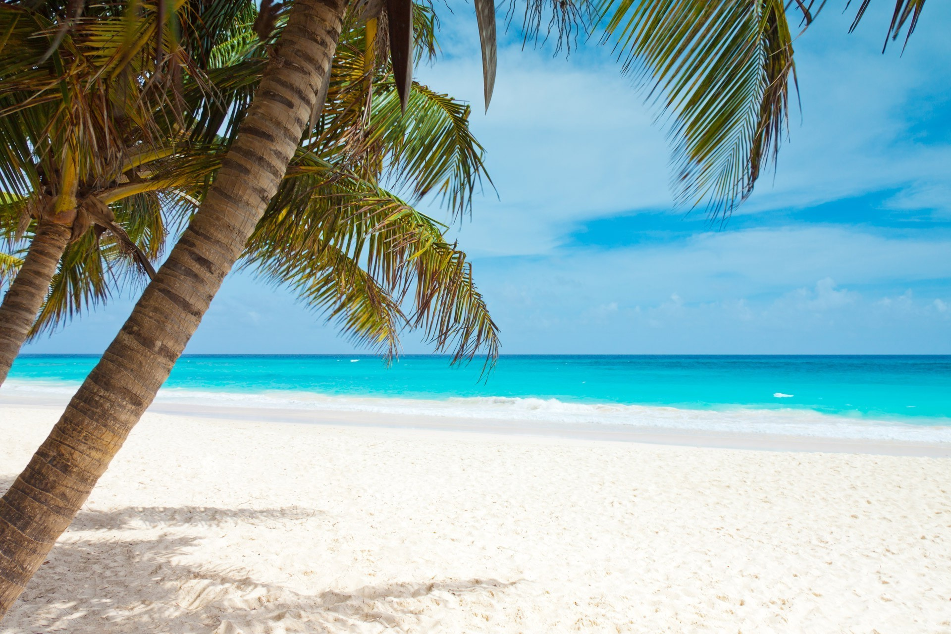 beach, Blue, Coast, Palm Trees, Landscape, Caribbean, Sea, Sky, Watering Wallpapers  HD / Desktop and Mobile Backgrounds