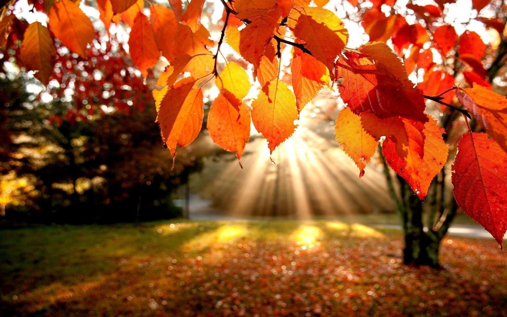 Fall Leaves Wallpapers for Desktop, wallpaper, Fall Leaves .