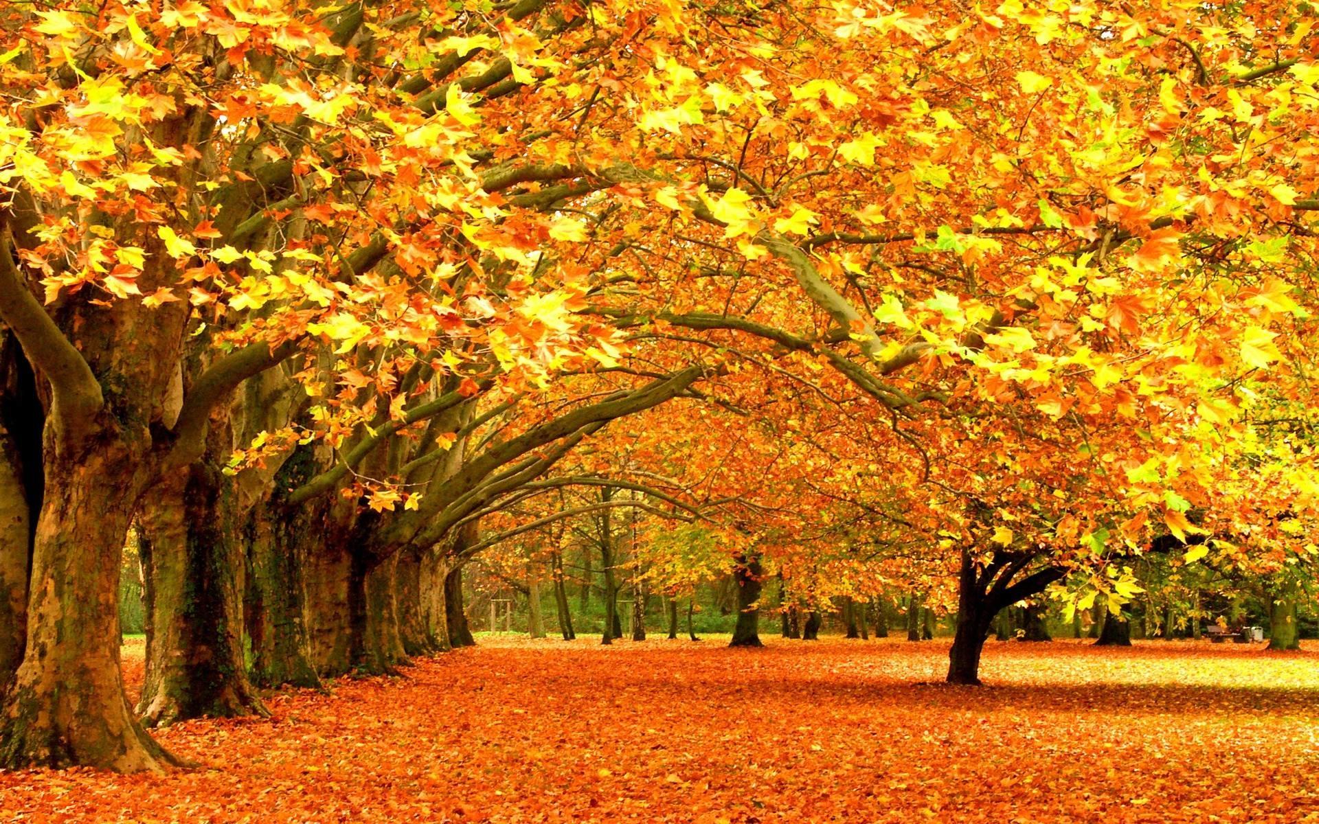 Falling Leaves HD Wallpapers – HD Wallpapers Inn