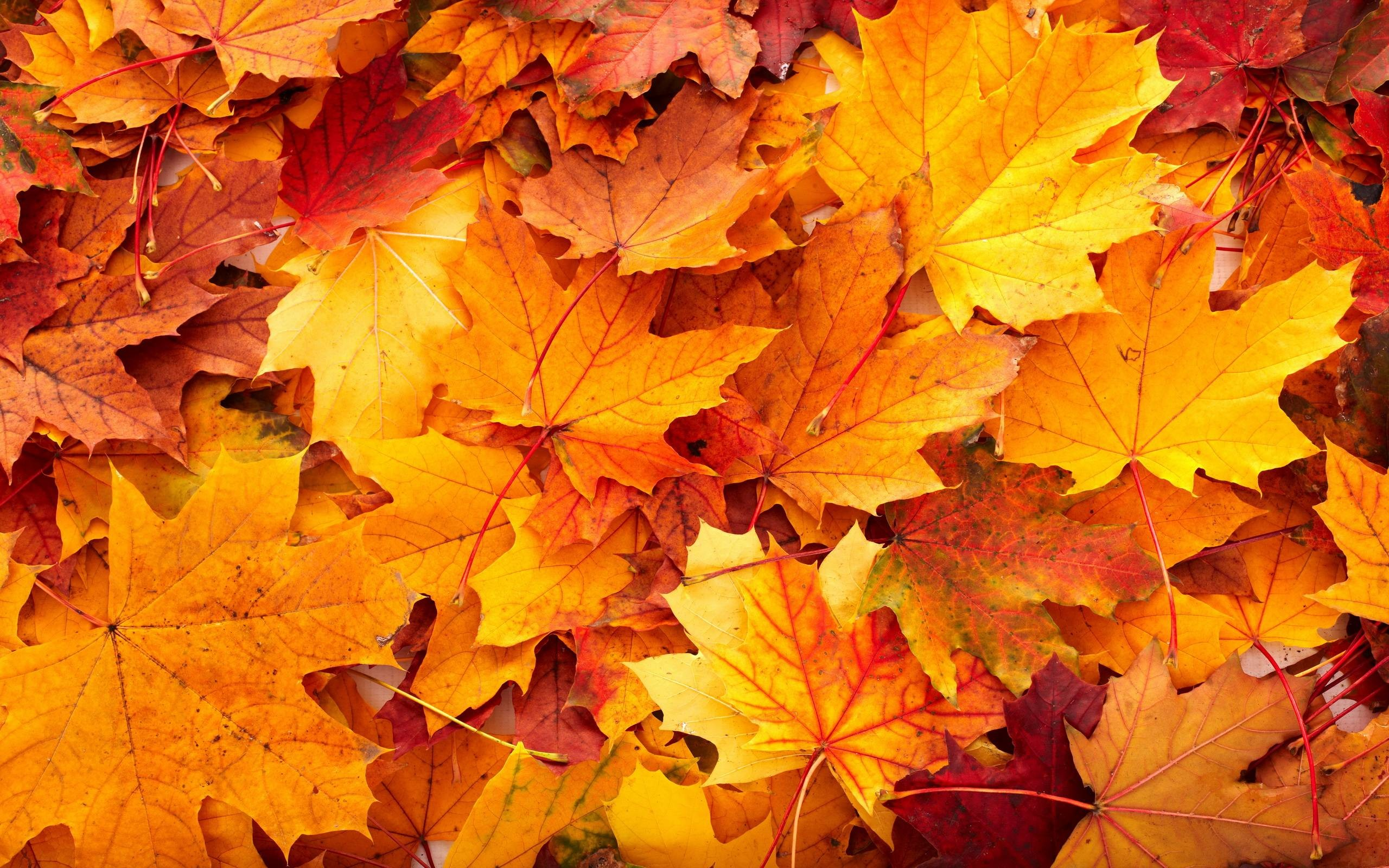 Fall Leaves Nature High Resolution Wallpaper Desktop Backgrounds Free