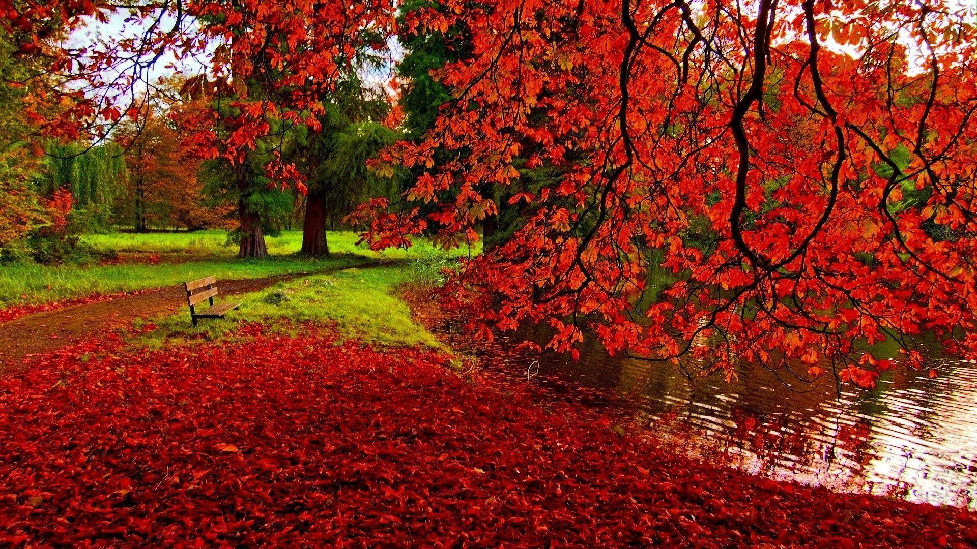 Fall Leaves Desktop Backgrounds – wallpaper.