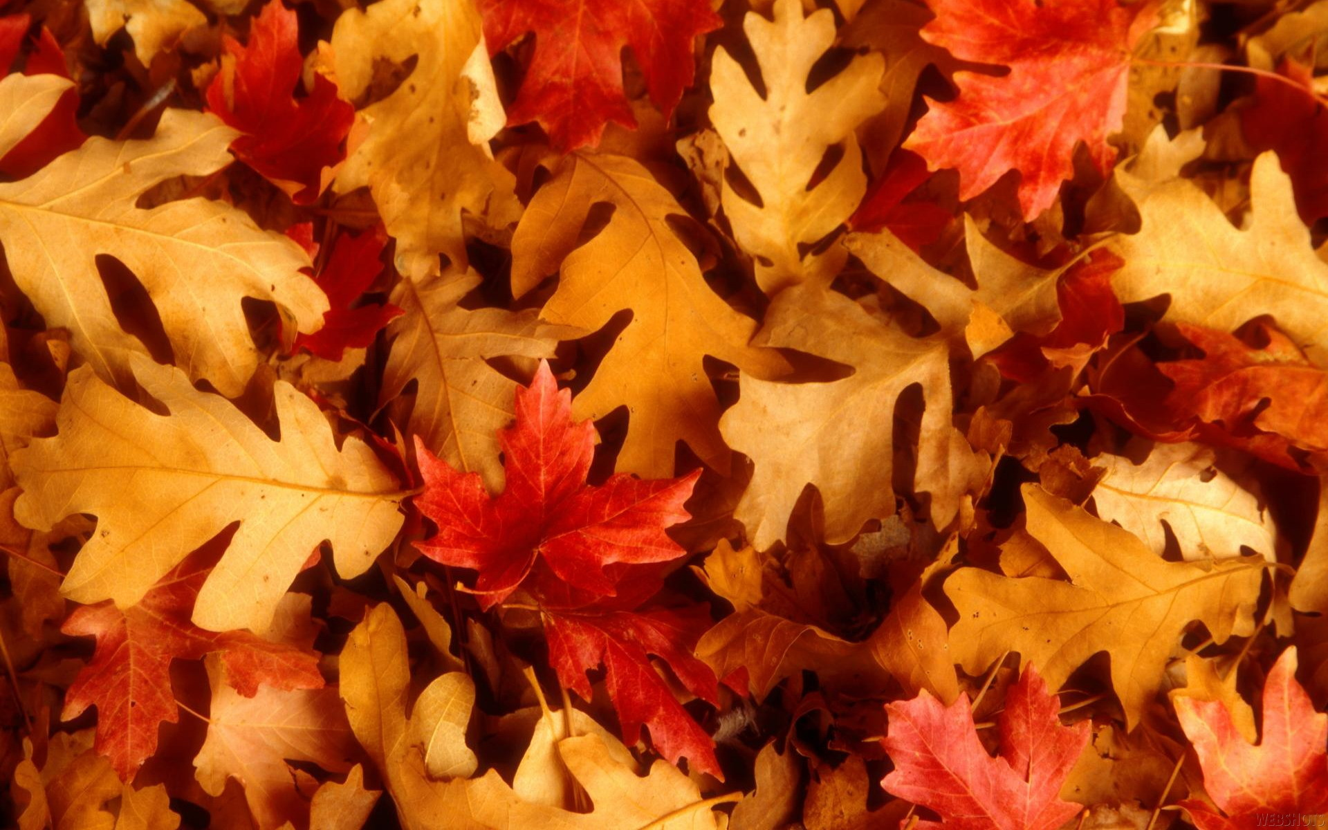 Autumn Leaves Wallpaper Autumn, Leaves, Fallen, Leaves