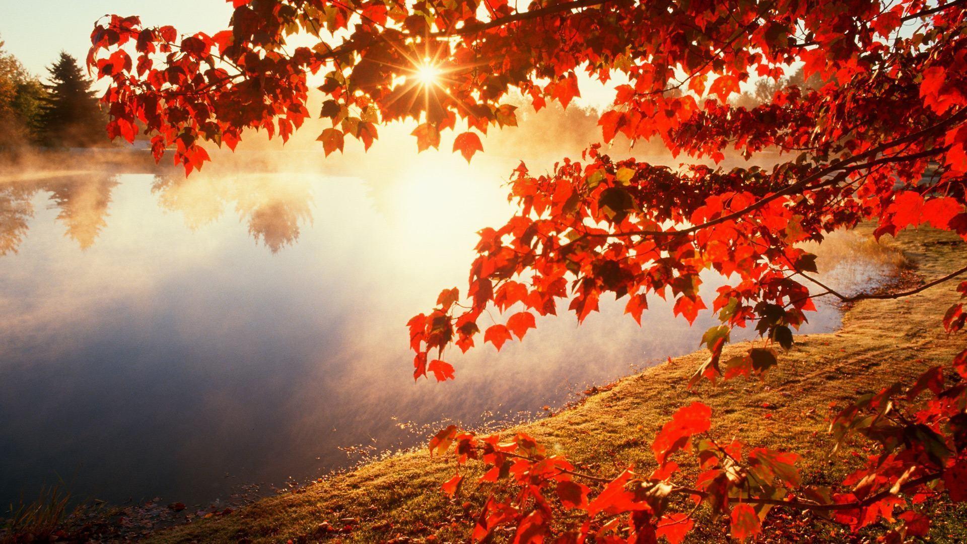 wallpaper.wiki-HD-Fall-Foliage-Images-PIC-WPE008842