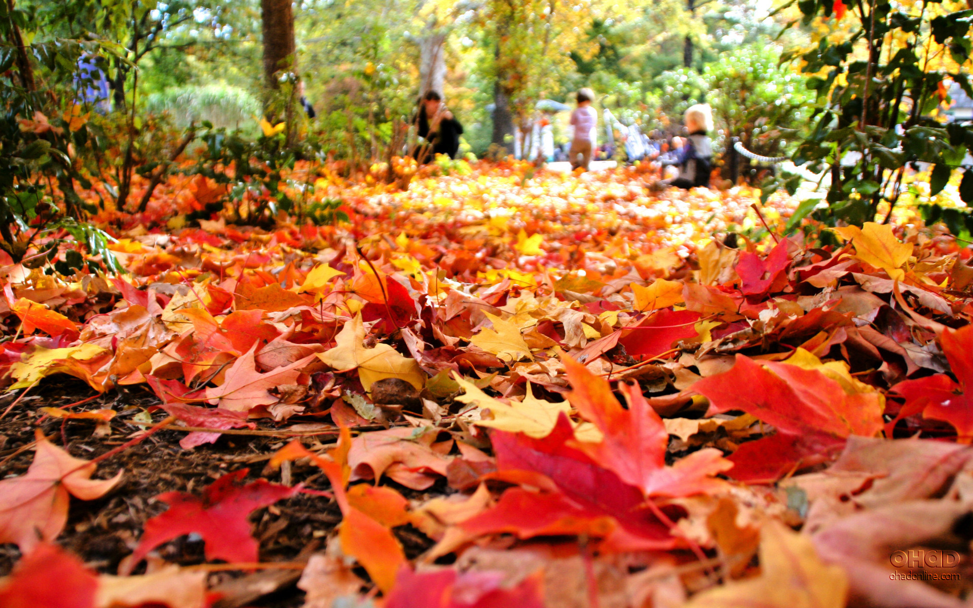 Autumn Leaves Falling Clip Art
