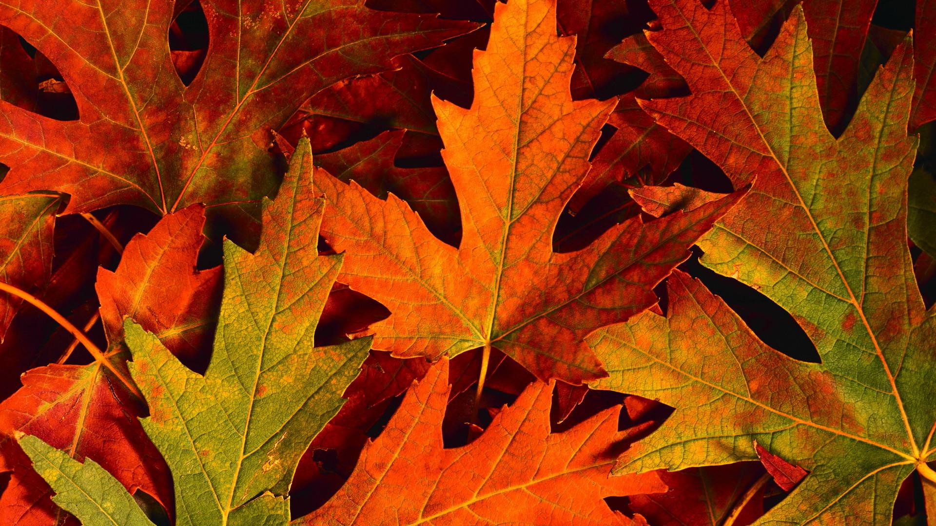 Colourful Autumn Leaves Hd Desktop Wallpaper
