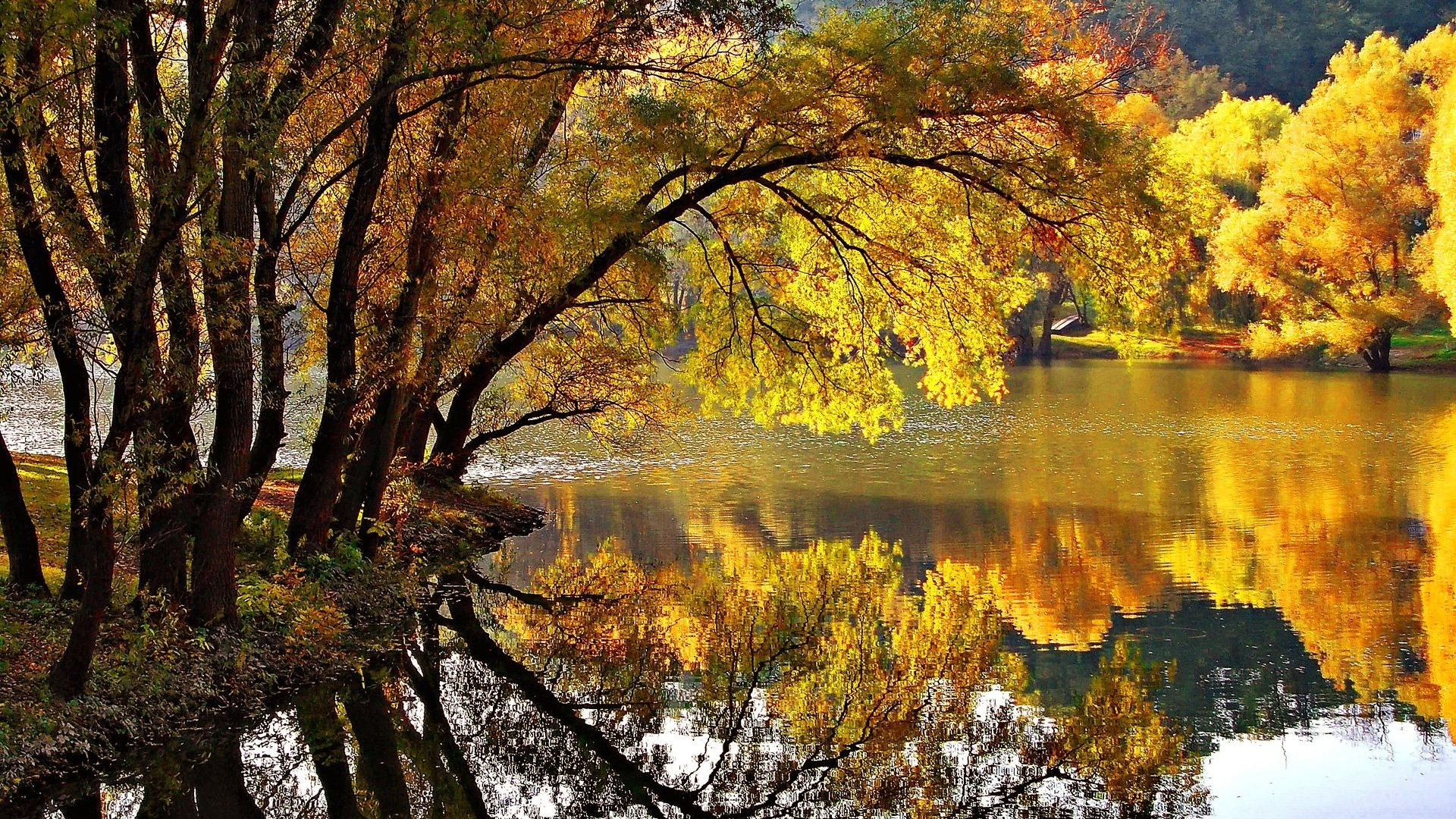 Leaves Tag – Park Golden Foliage Lovely Reflections Shore Pond Water Nature  Yellow Branches Silence Calmness