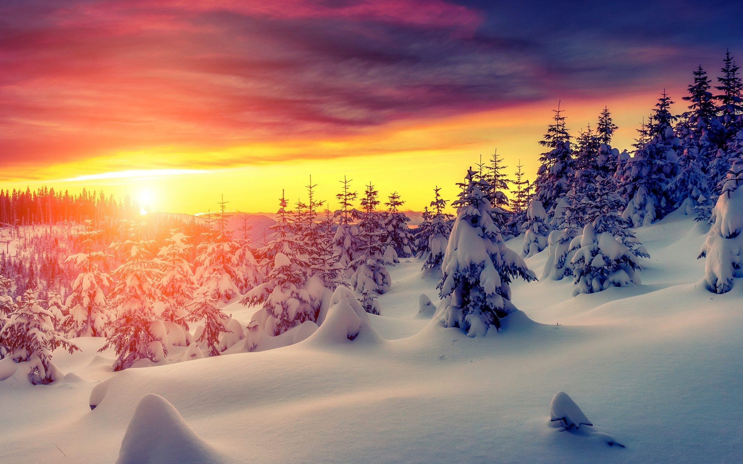 28 4k Winter