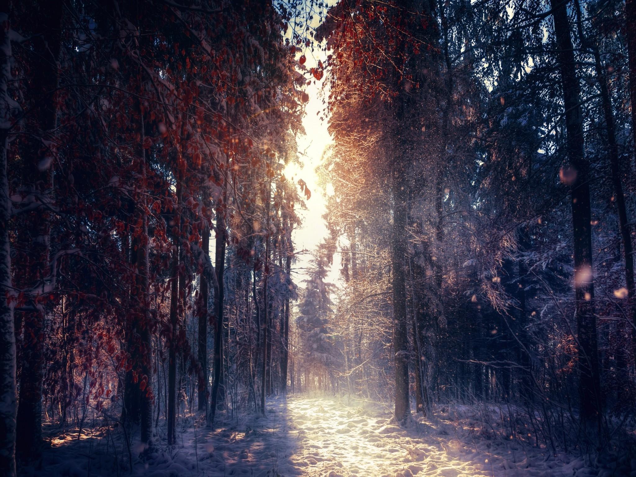 Forest in winter 4K Ultra HD wallpaper   4k-Wallpaper.Net