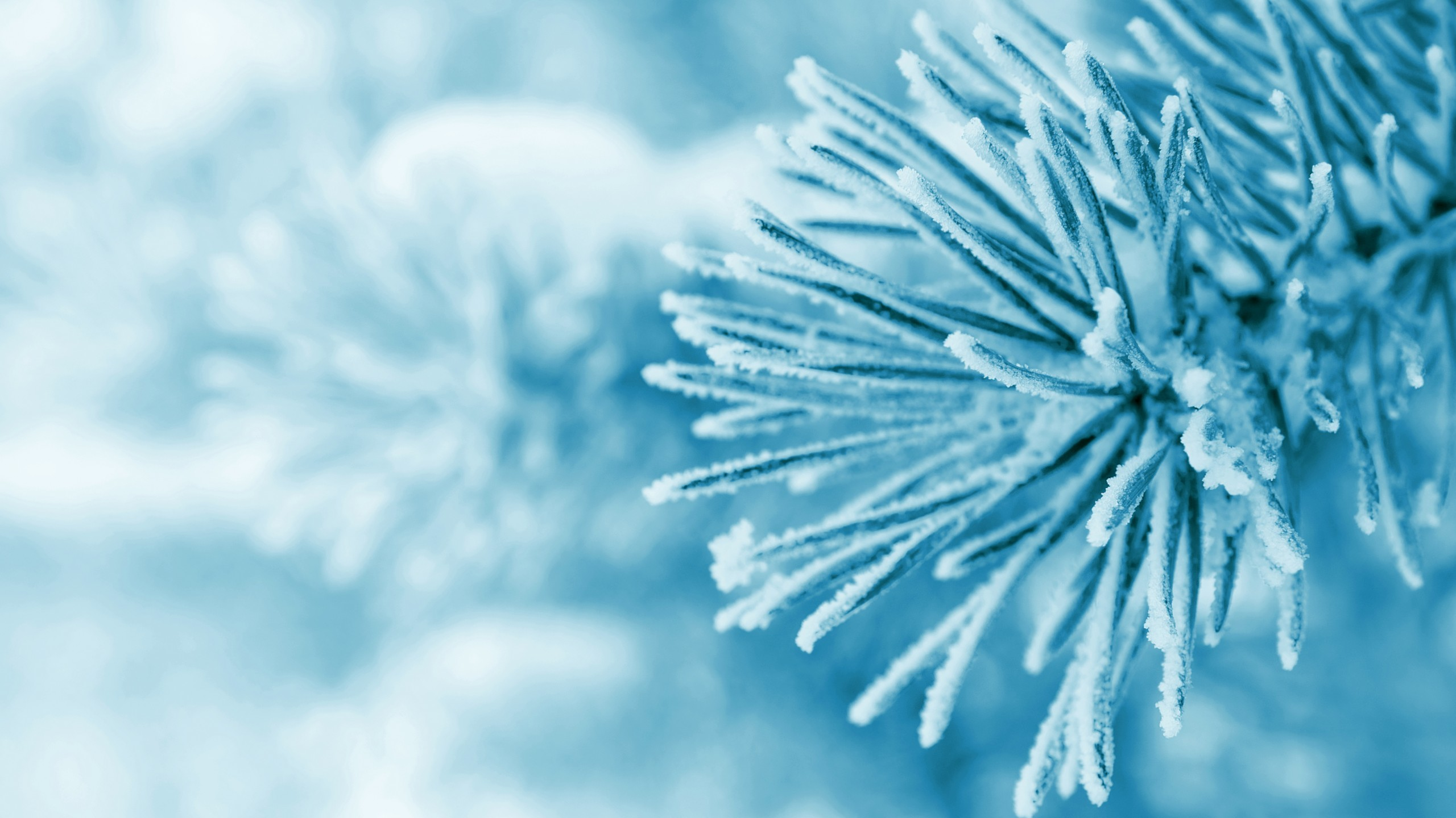 Nature / Winter Wallpaper