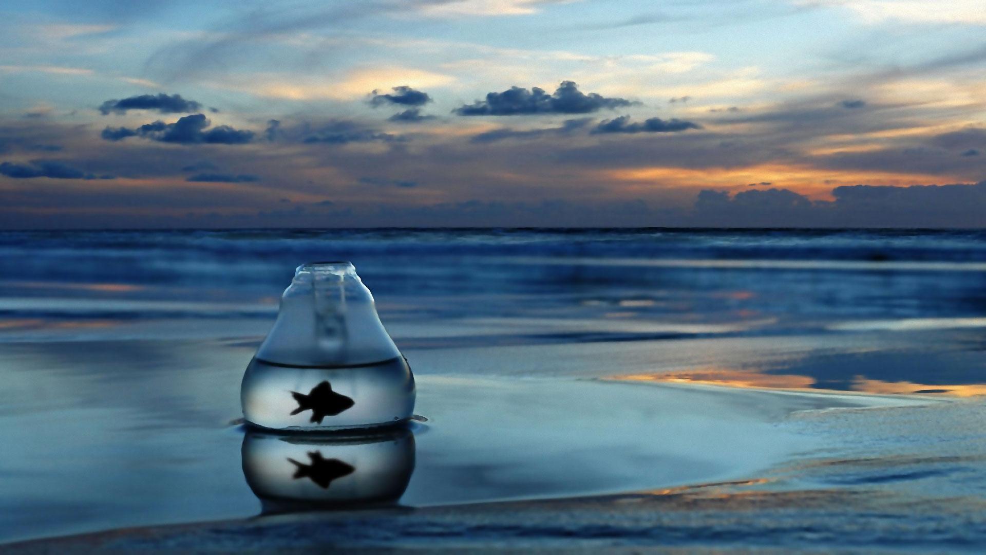 ocean-life-photos-Back-Into-The-Ocean-Back-