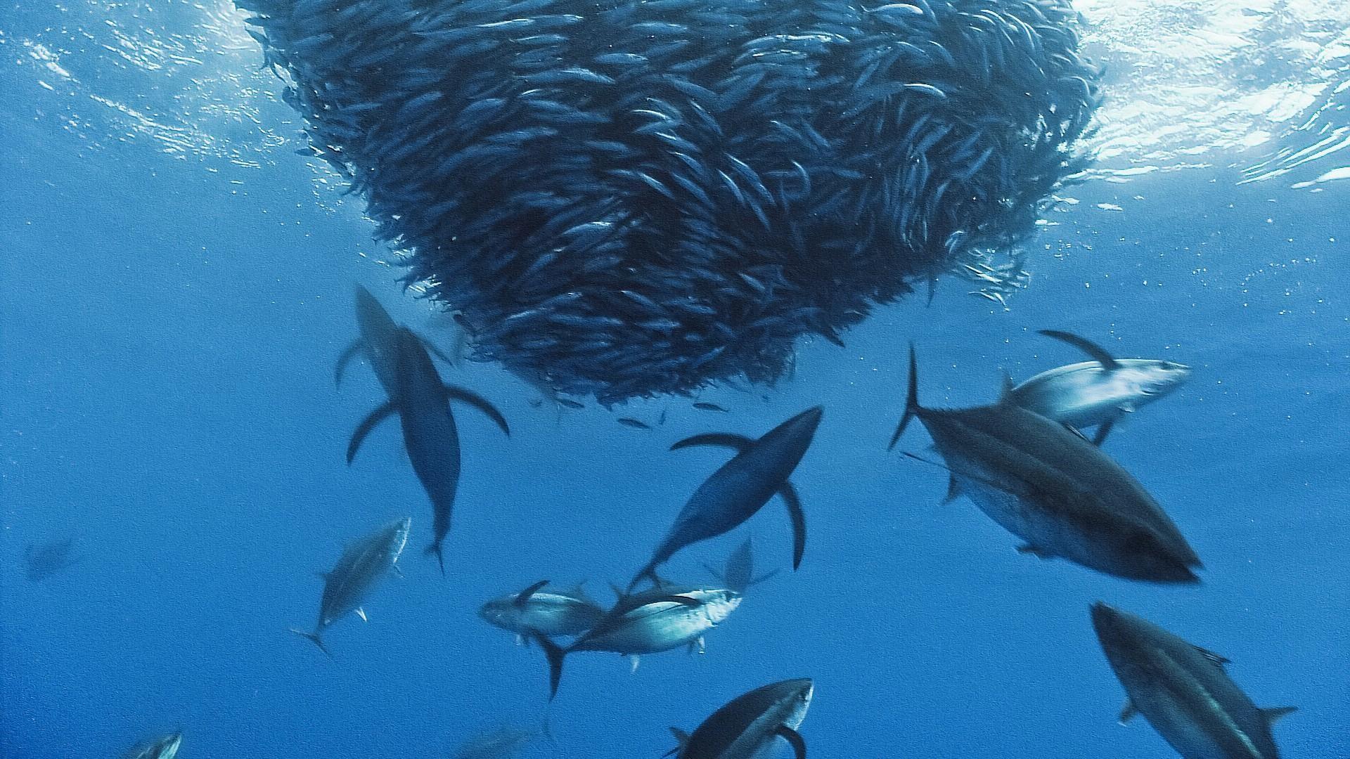 Deep-Ocean-Fish-Wallpaper-HD