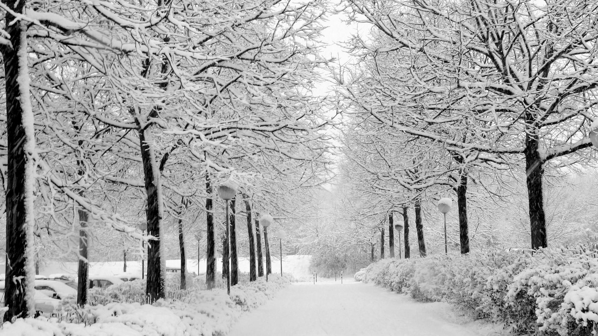 winter-blackwhite-full-hd-1080p-wallpaper