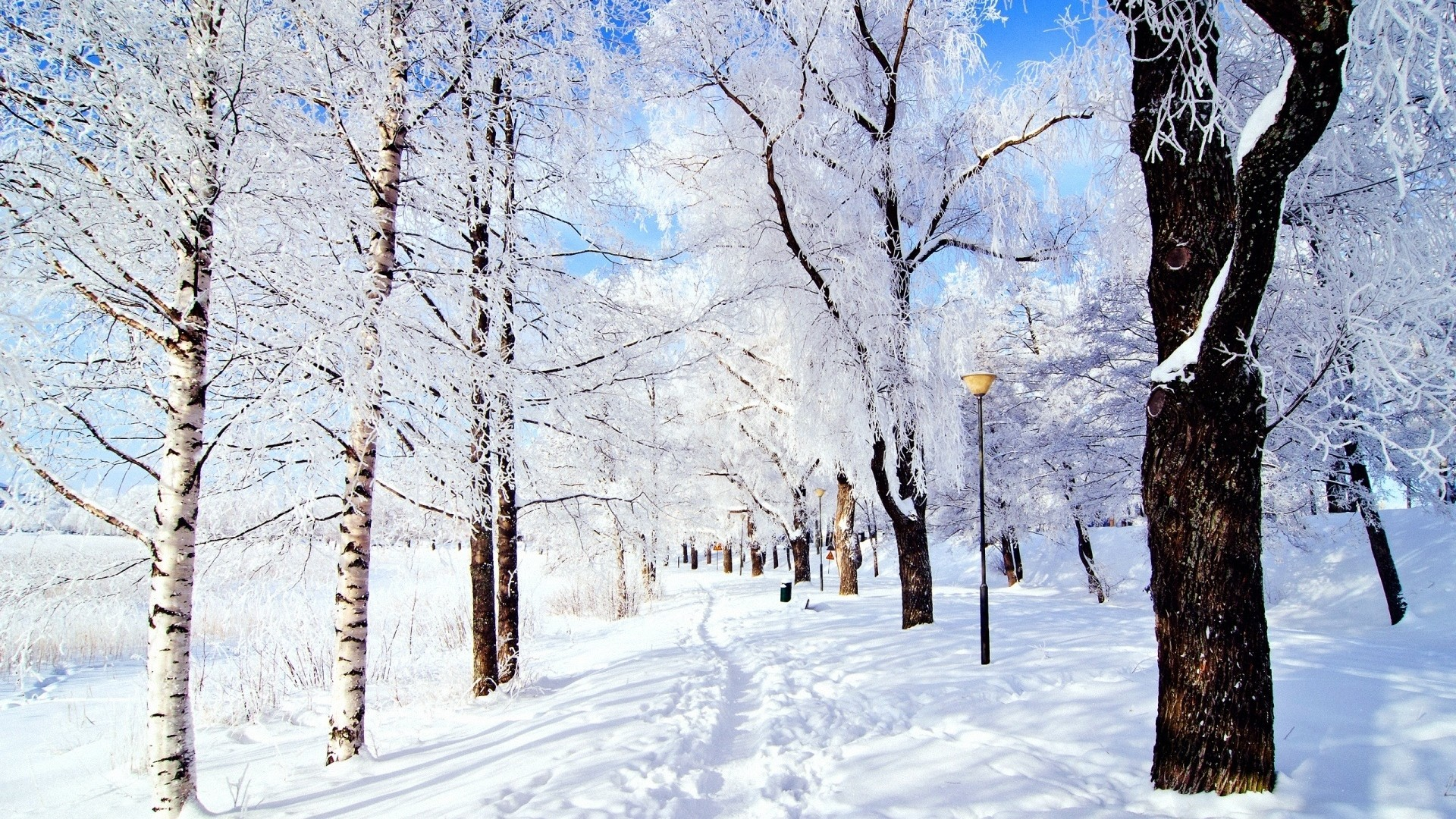 Wallpaper trail, trees, snow, frost, day, winter