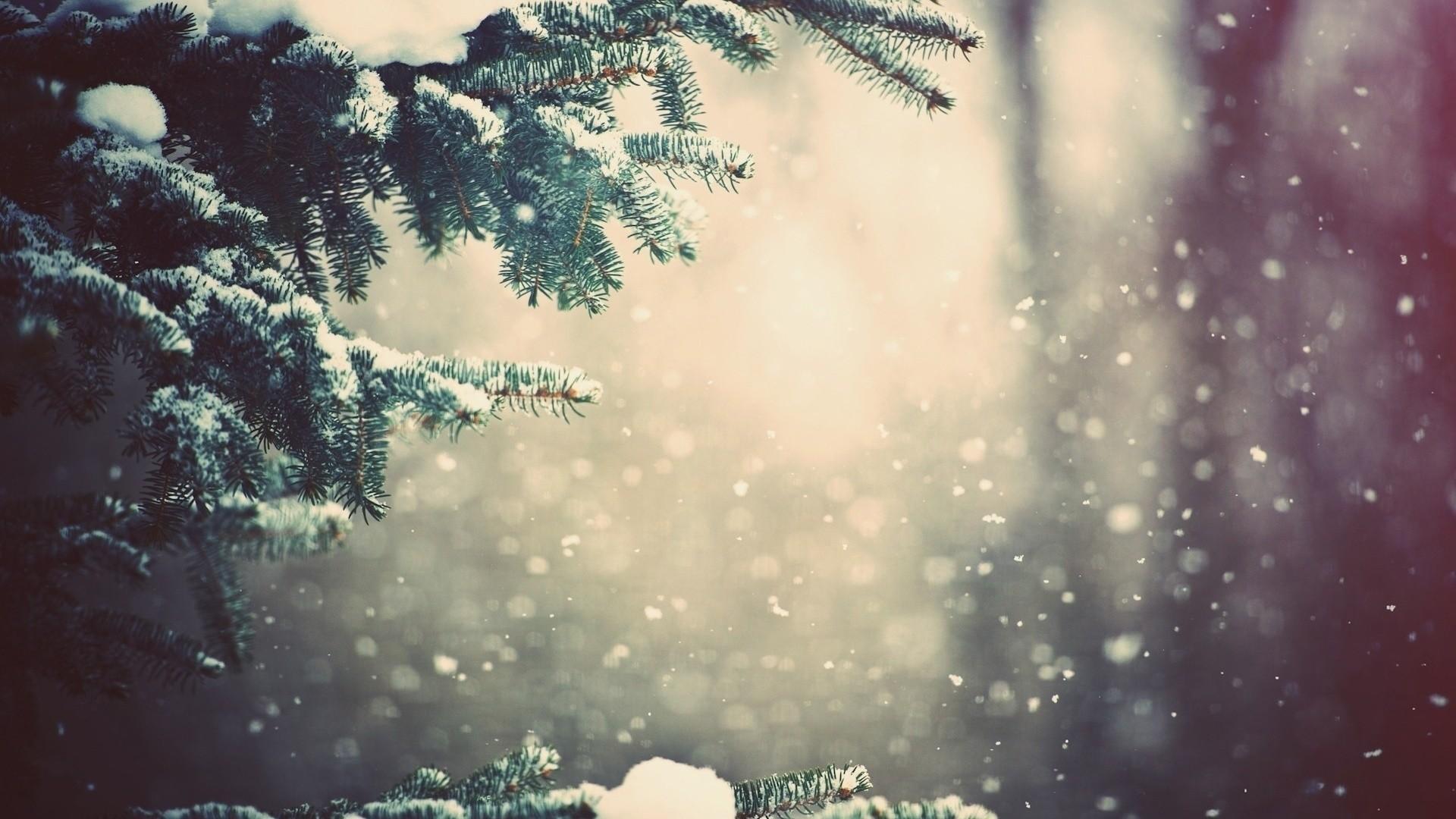 Preview wallpaper winter, spruce, branches, snow, glare 1920×1080