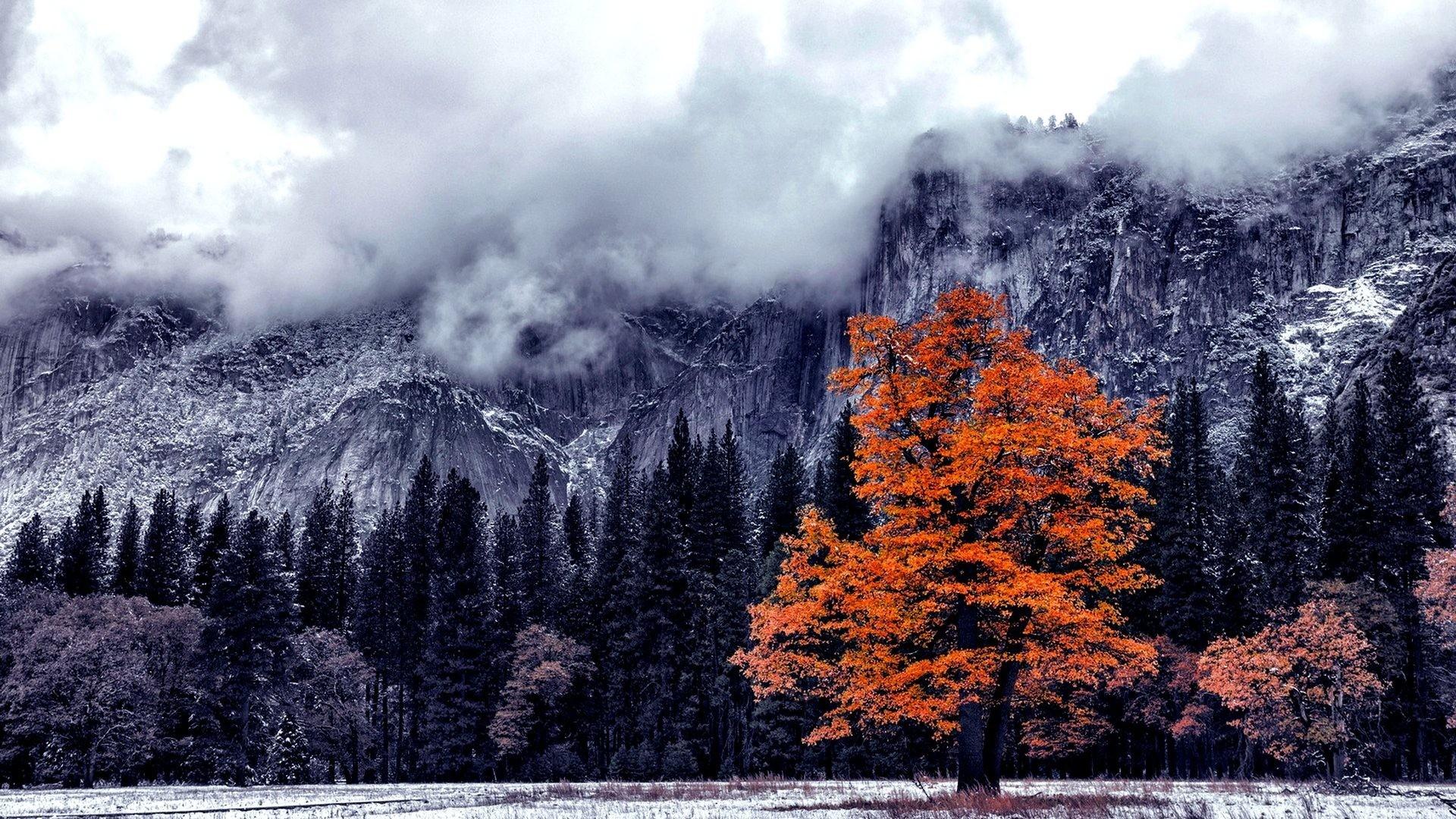 Winter – LAST AUTUMN TREE Landscape Mountain Wallpaper Winter Download Free  for HD 16:9