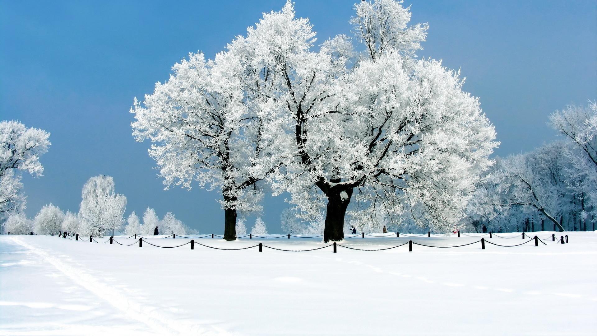Beautiful Winter Wallpapers HD   1920 x 1080p Download Premium Quality #HD # winter #
