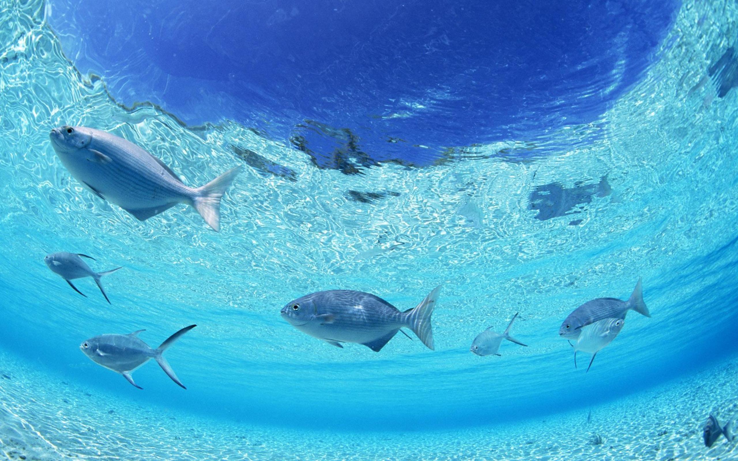 Wallpapers For > Ocean Floor Wallpaper