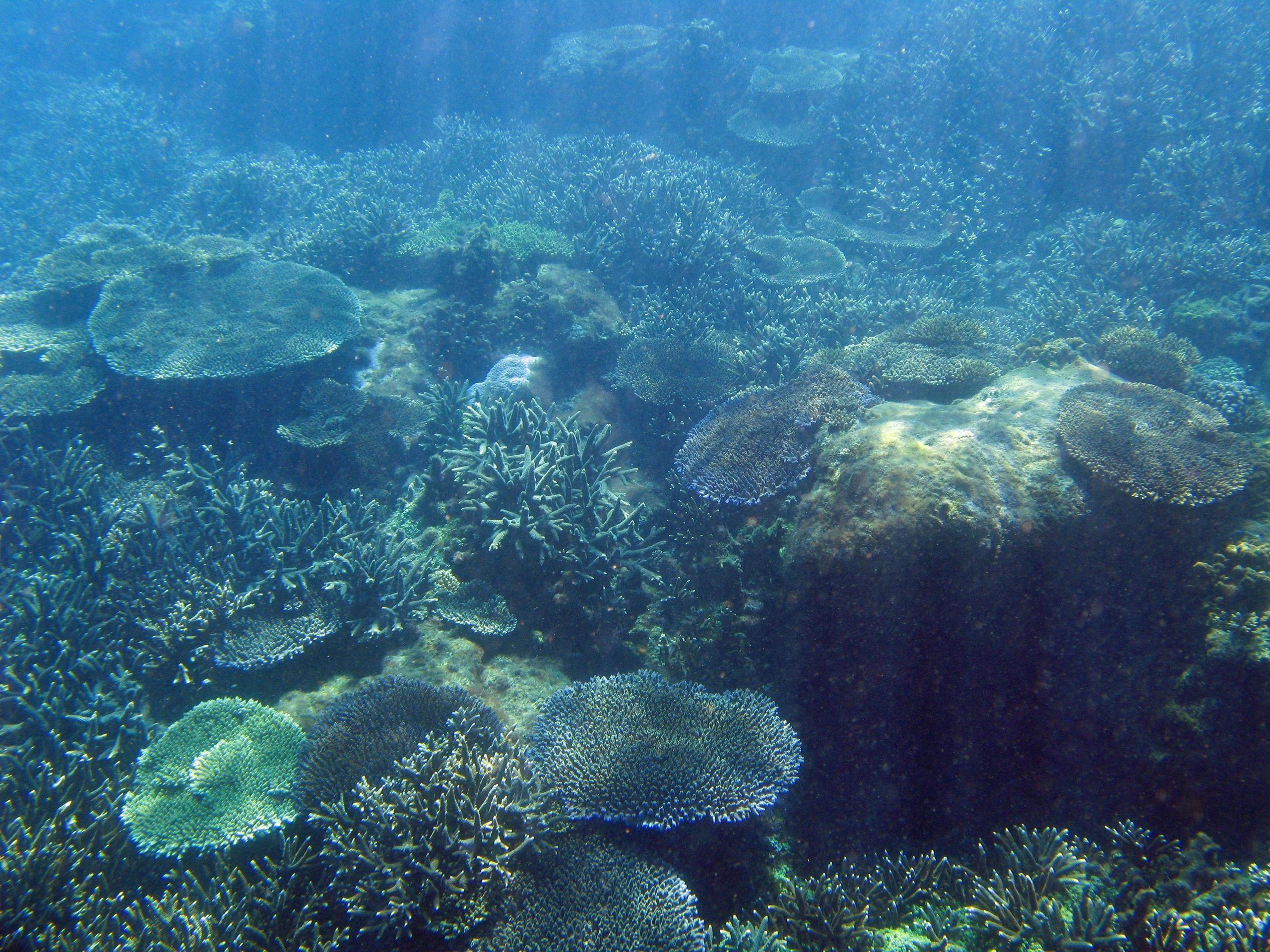 Ocean Floor Wallpapers – Wallpaper Cave · wallpapercave.com