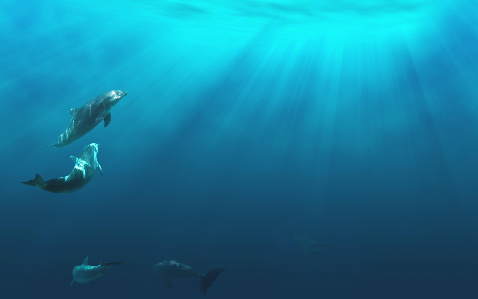 ocean life underwater ocean floor background ocean water background .