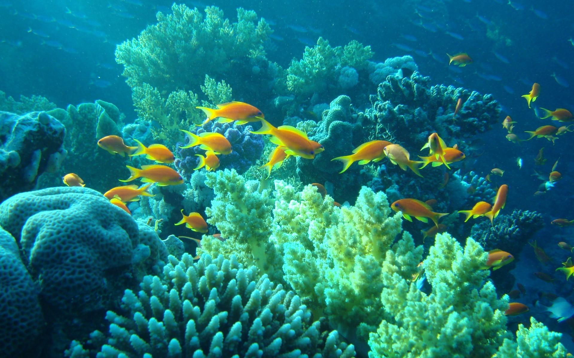 HD Yellow fish in the sea Wallpaper