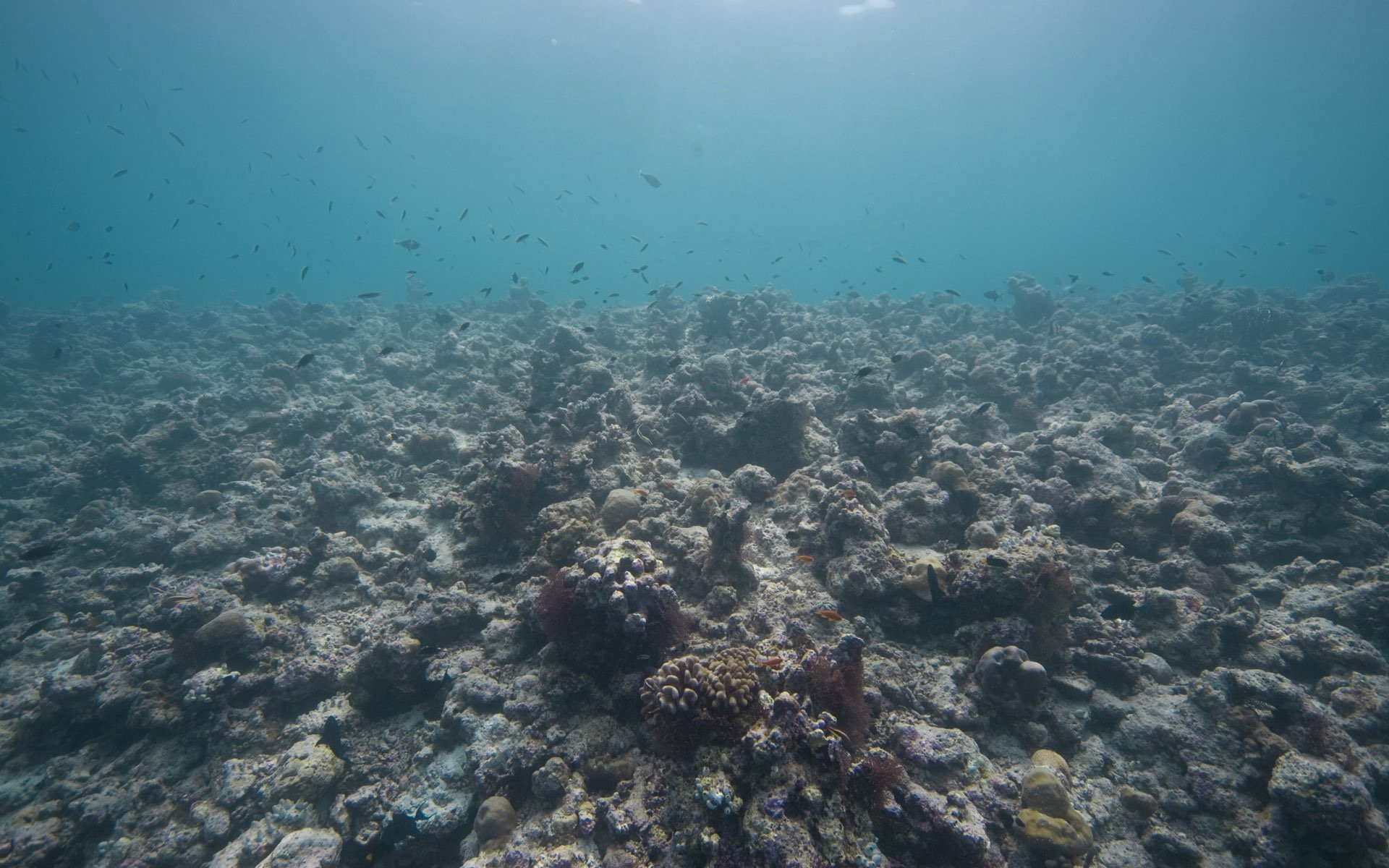 The Best Sea Floor World HD